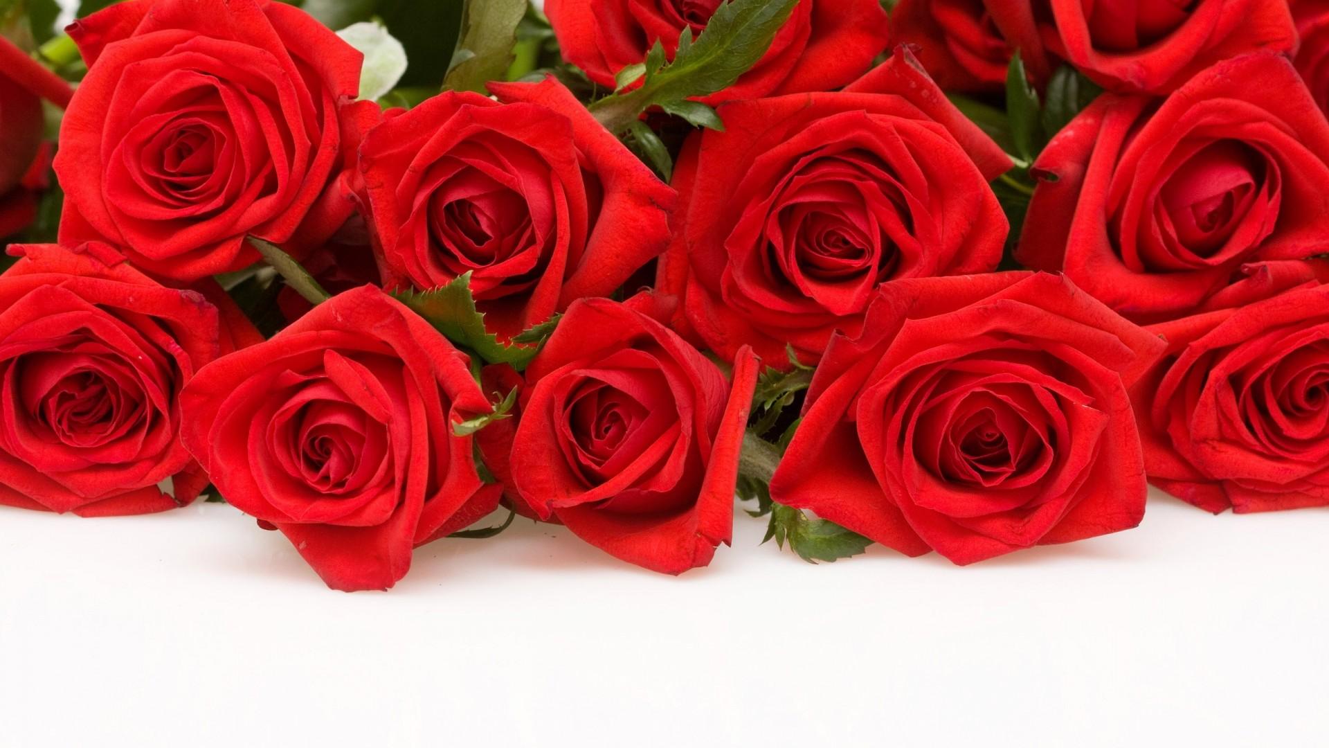 Full HD 1080p Red Rose Wallpapers