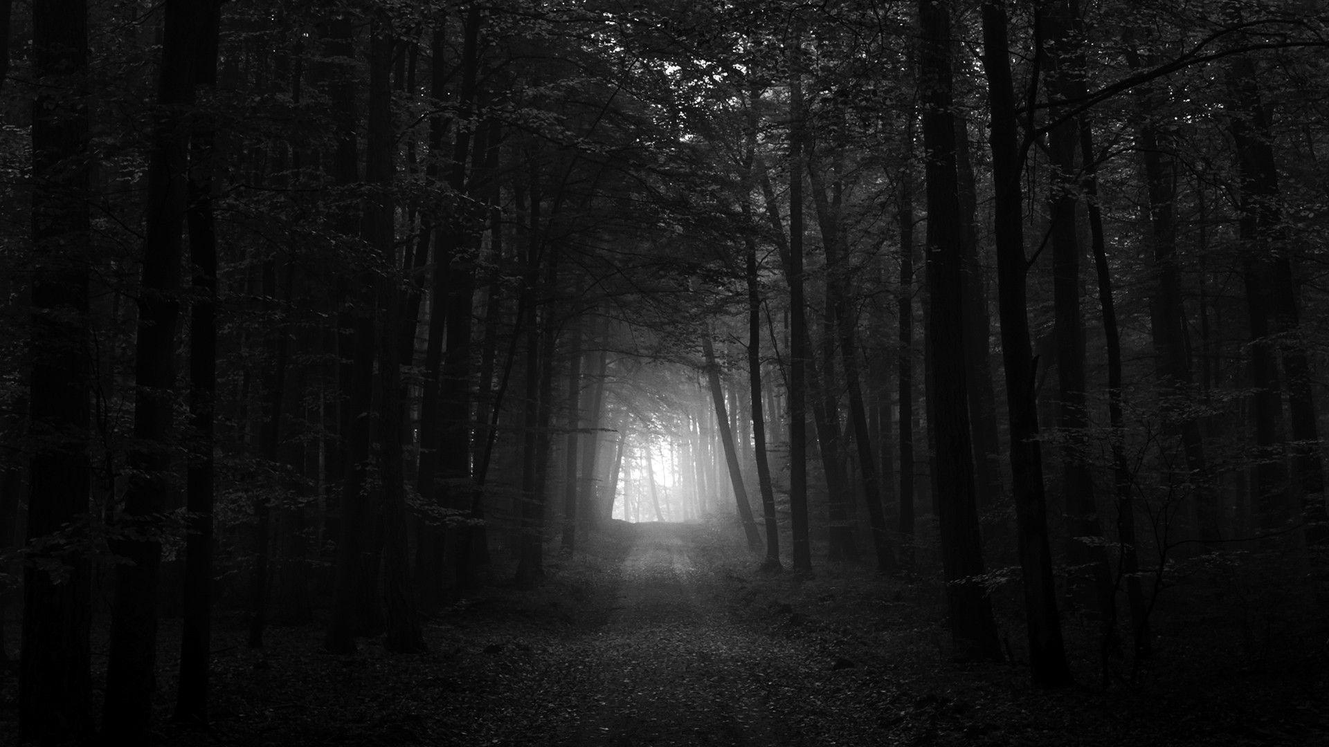 Black And White Dark Forest HD Wallpaper 1920×1080