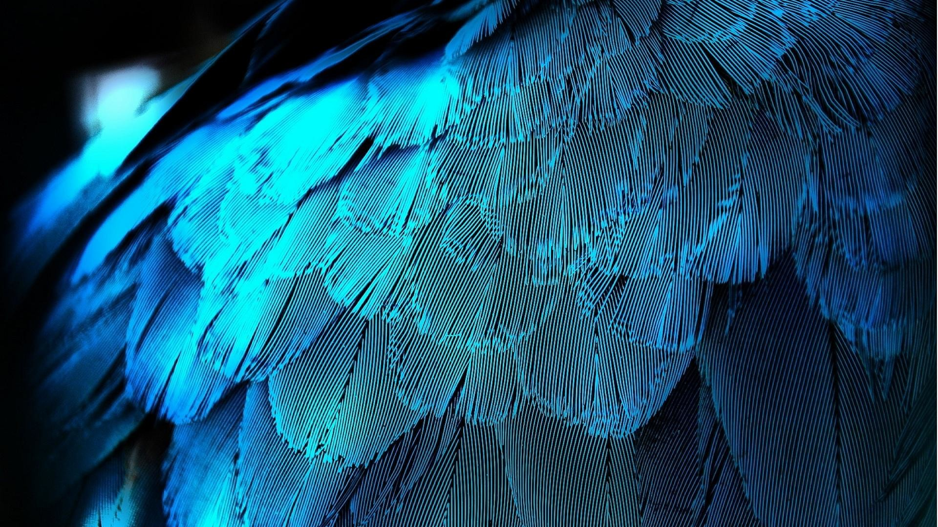 wallpaper.wiki-Pictures-blue-feather-1920×1080-PIC-WPB003119