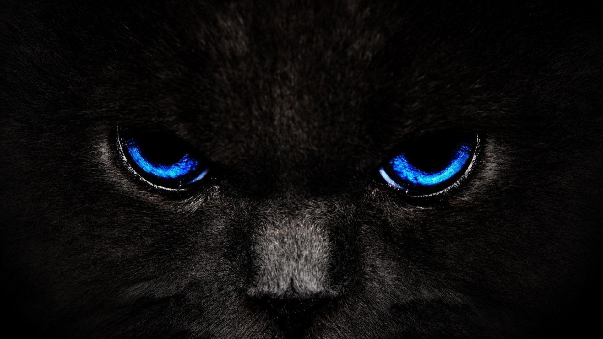 Cats Wallpapers S Hd Black Cat Blue Eyes Wallpaper