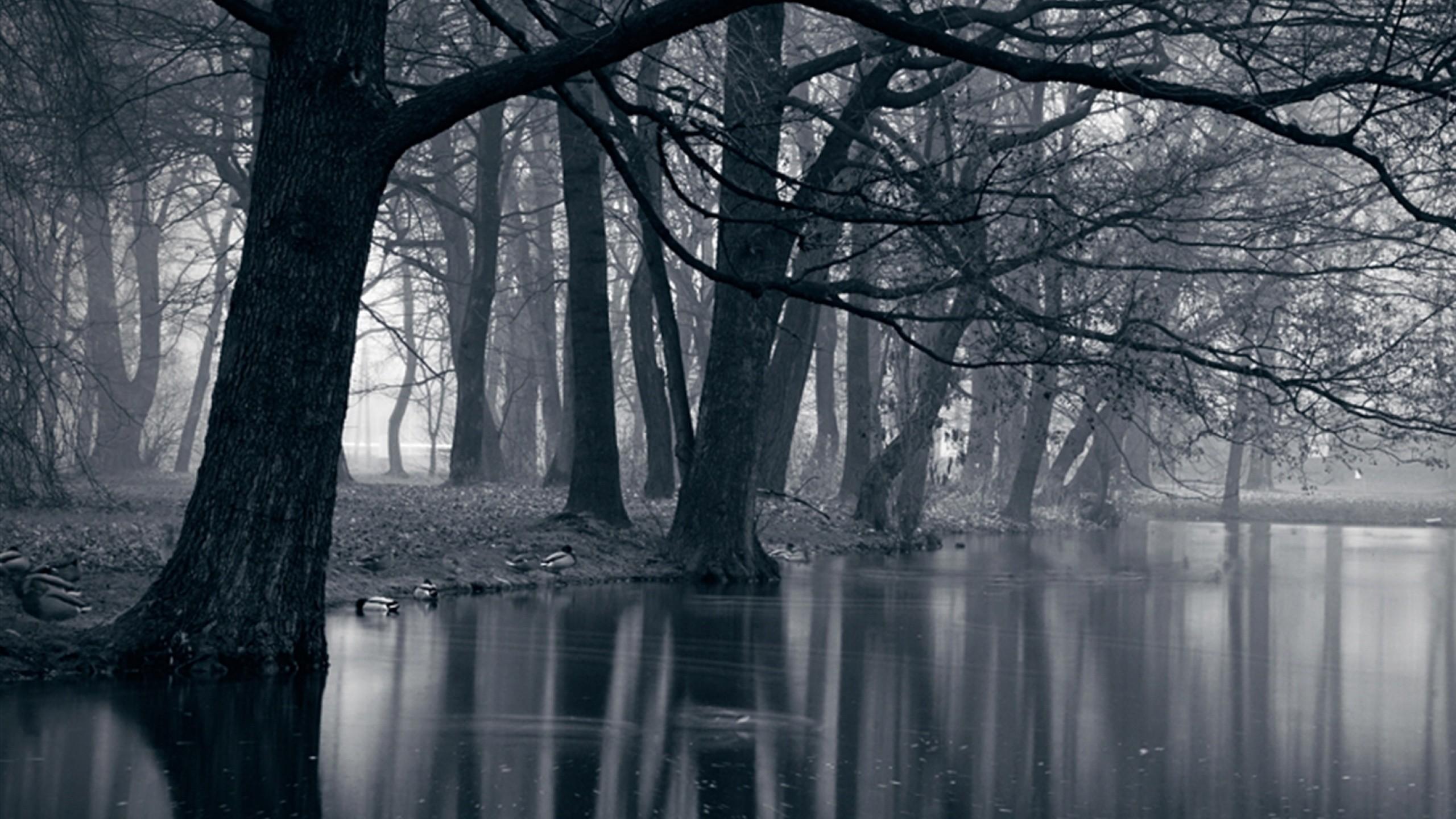 Mystic Park Dark Forest & Sea