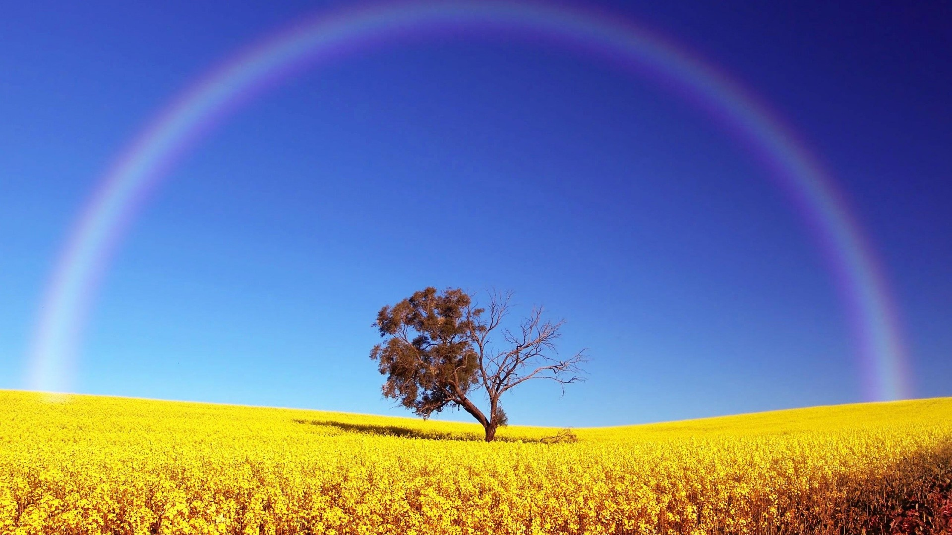 Real Rainbow Background Wallpaper