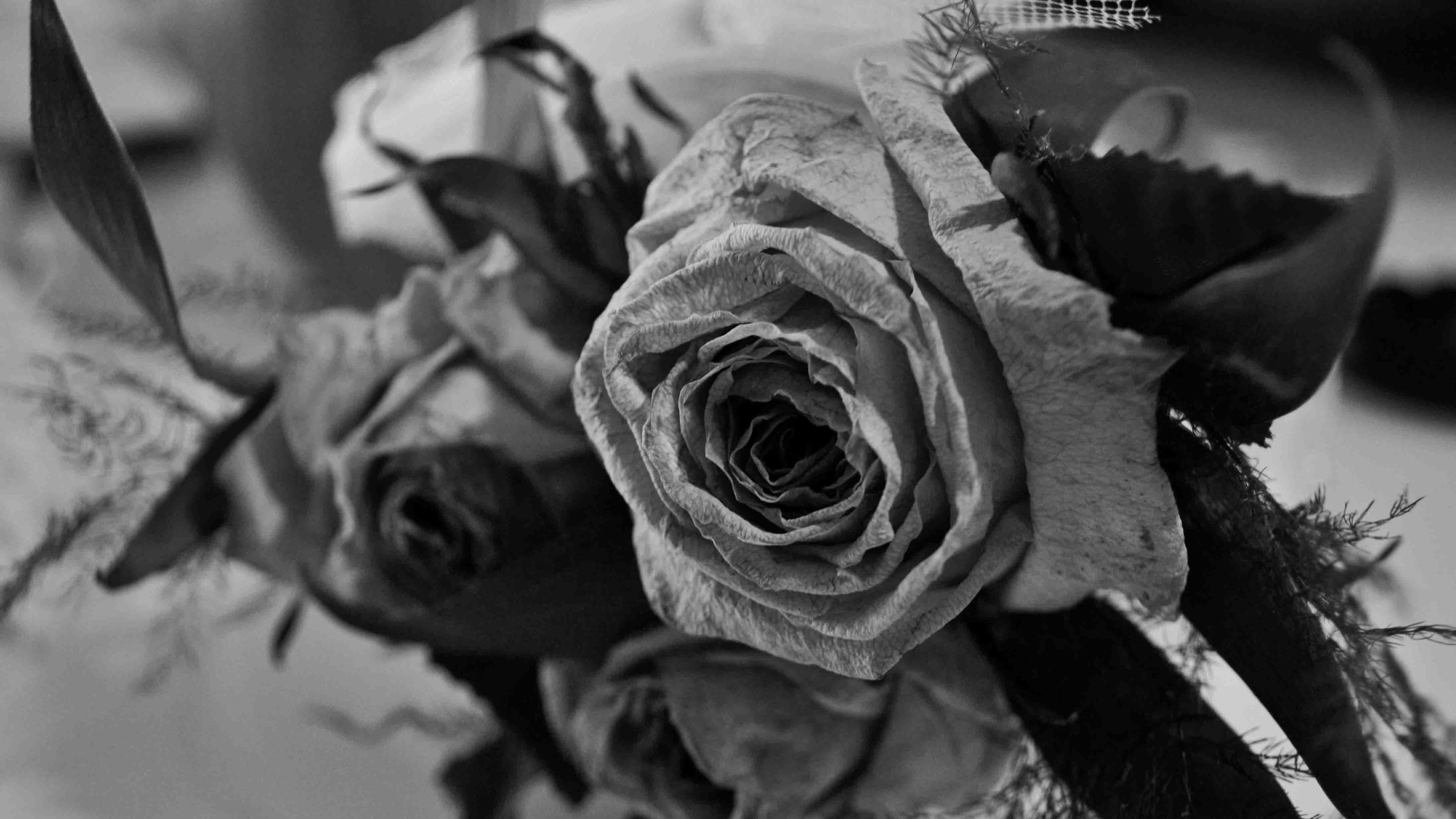 Black rose ultra hd wallpaper free download.