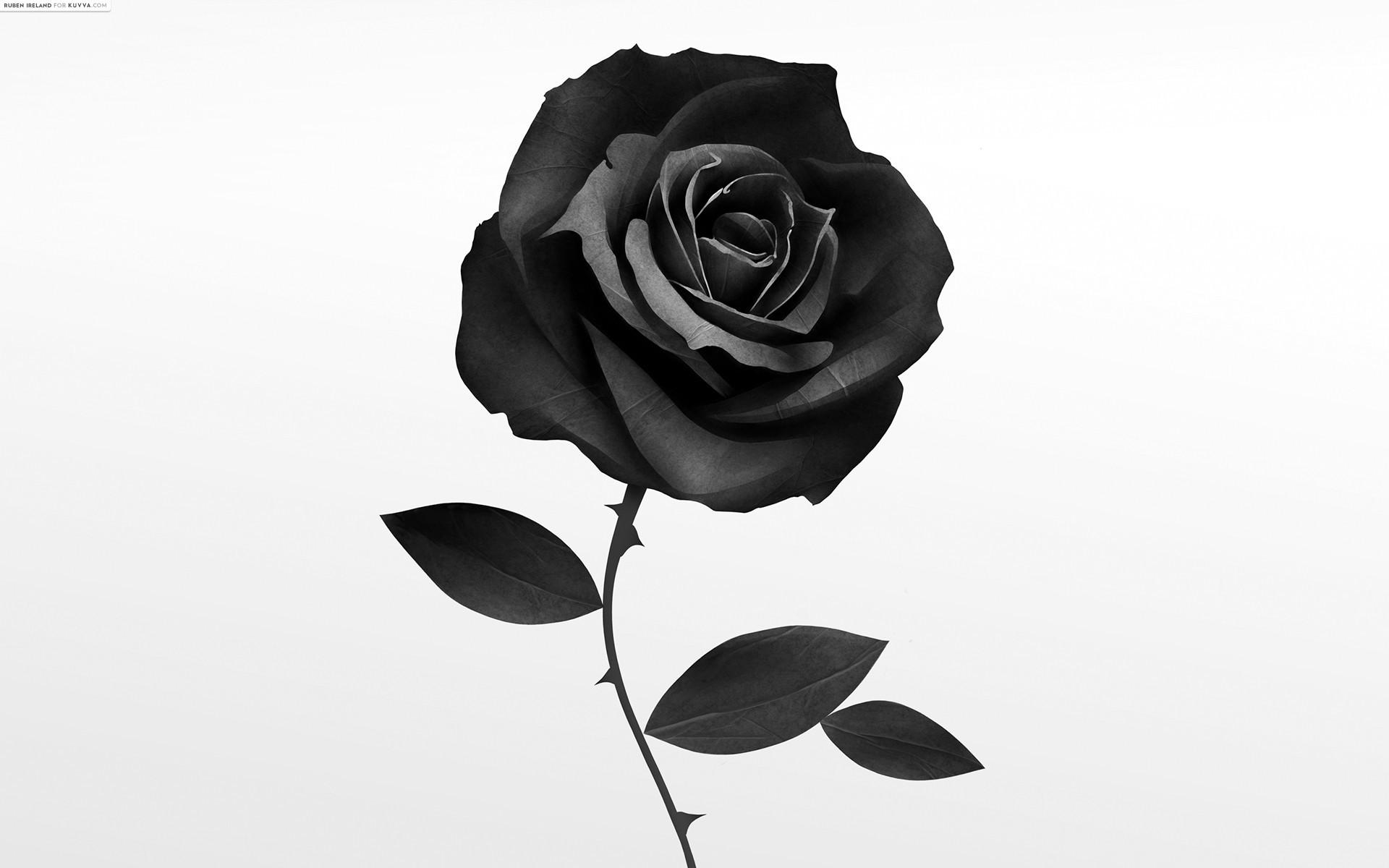 Single Black Rose Wallpaper