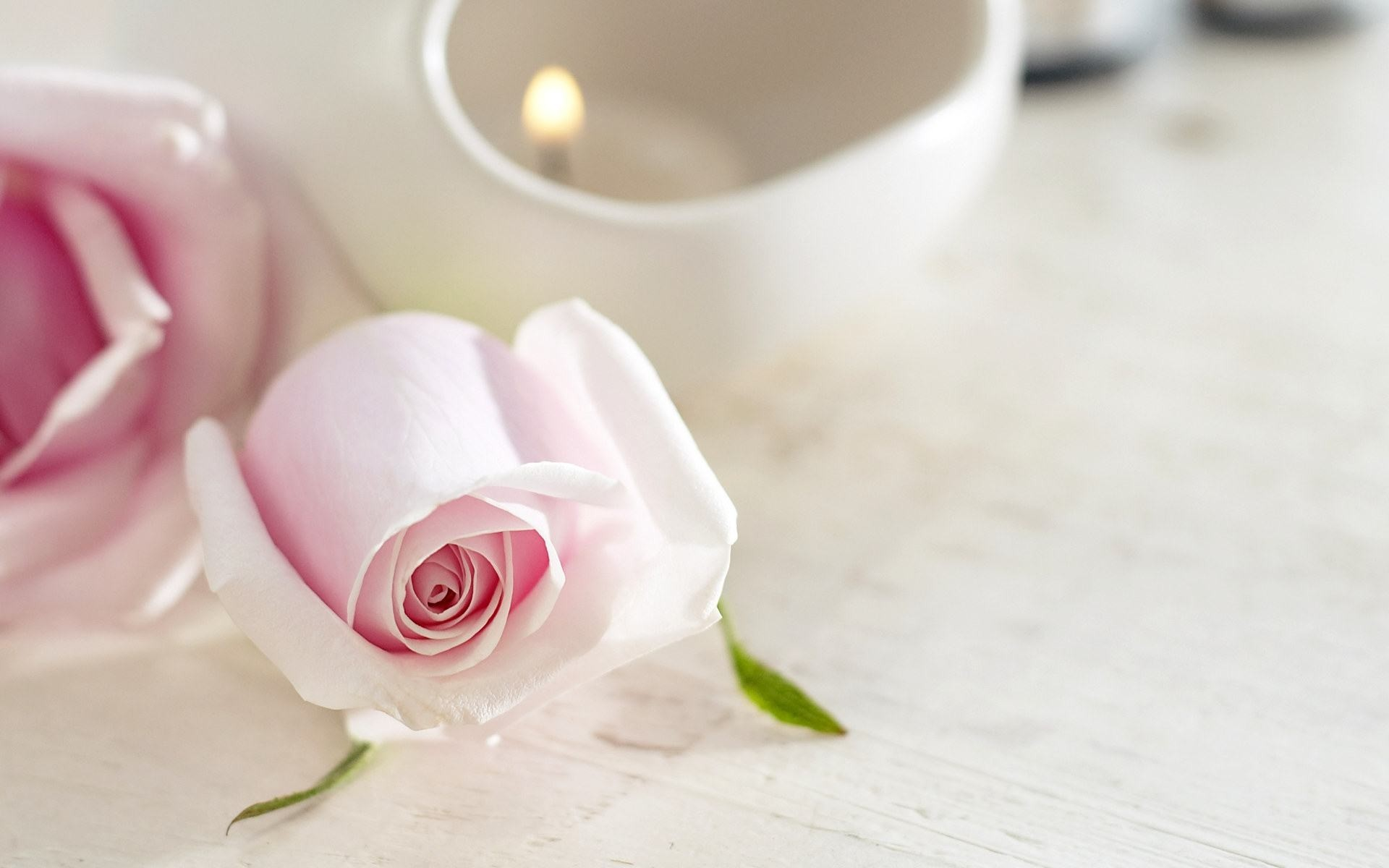 Wallpapers Backgrounds – wallpapers background white roses beautiful nature  light flower pink
