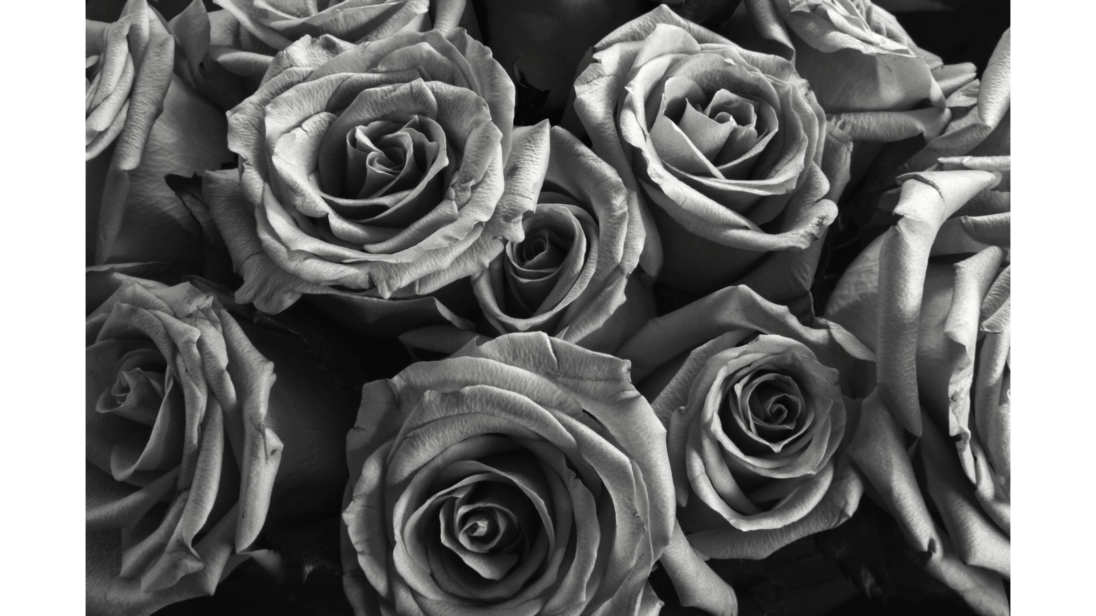 Silver Rose Wallpaper