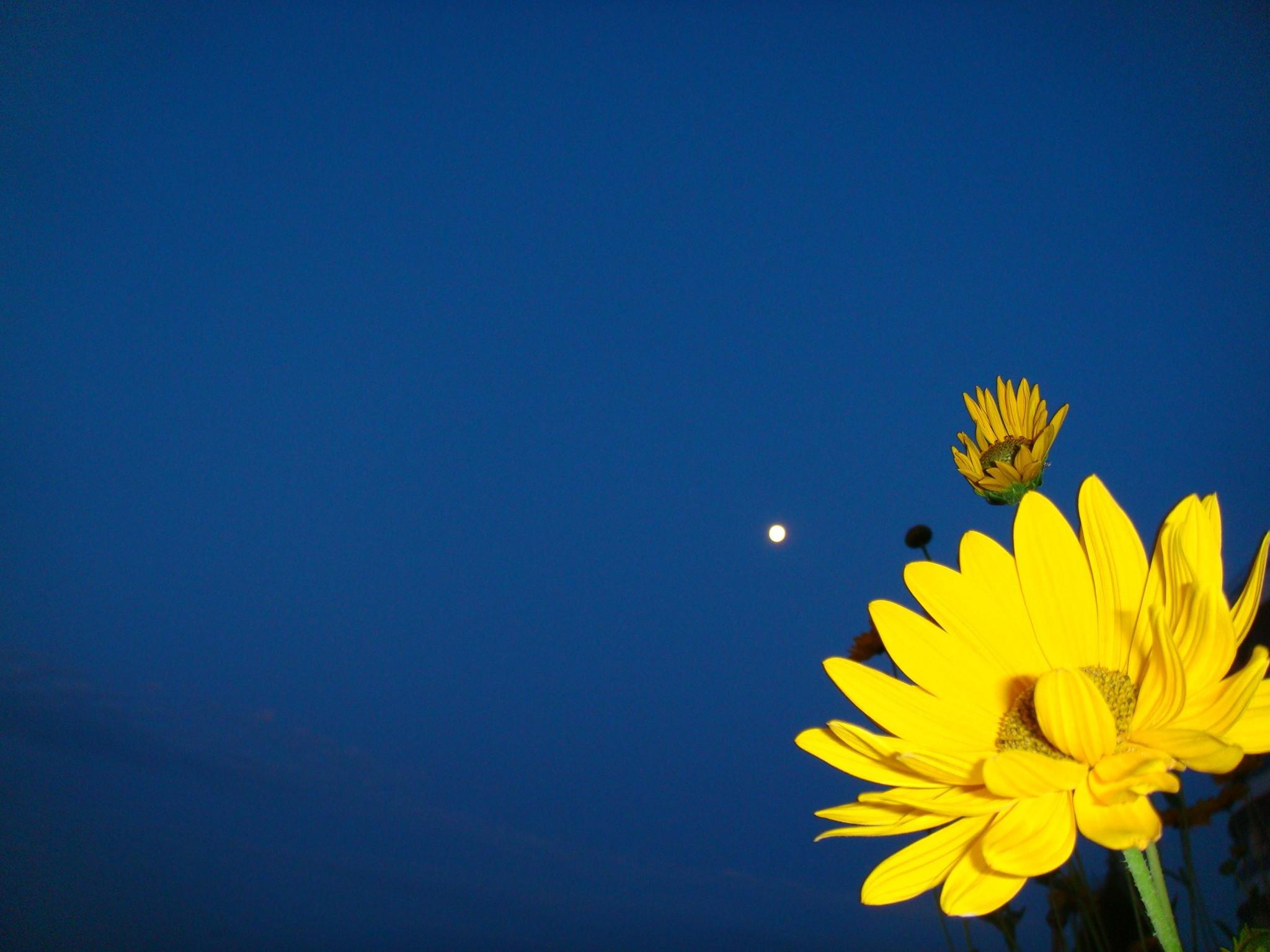 yellow and dark blue background on a dark blue