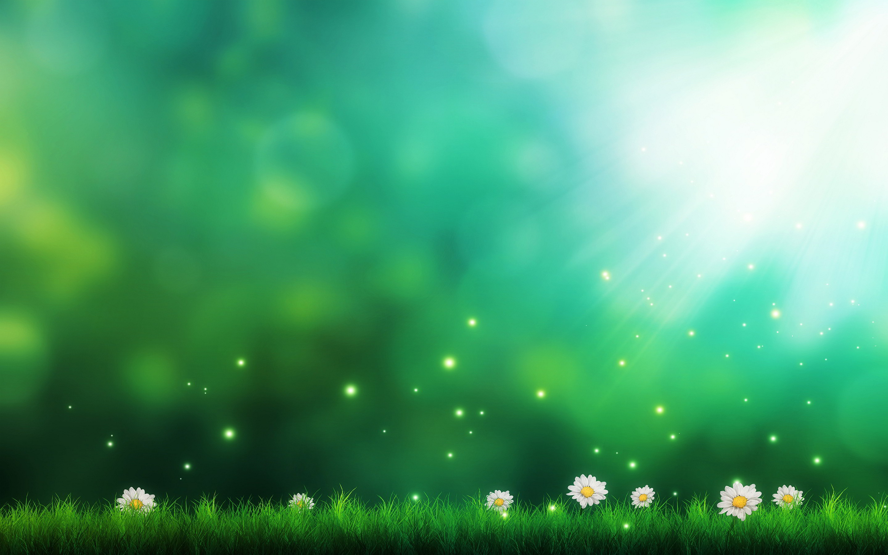 Daisies Green Background Wallpapers Pictures 2880x1800px