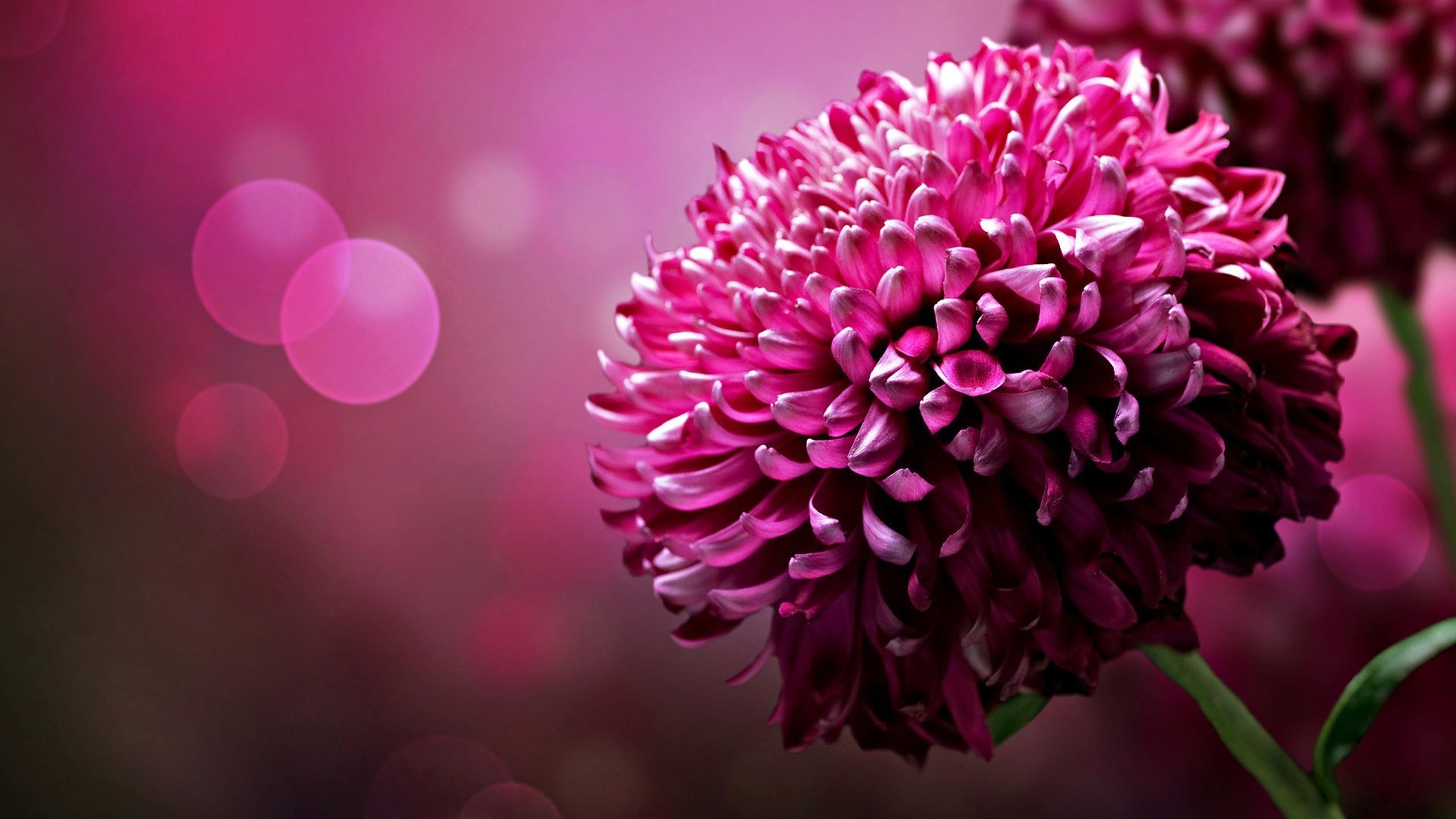 Pink Flowers HD Wallpapers – HD Wallpapers Inn