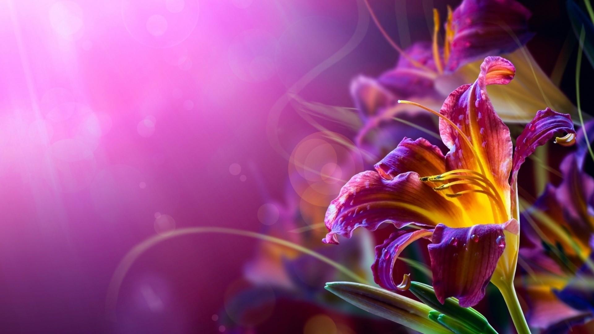 hd wallpapers flowers1