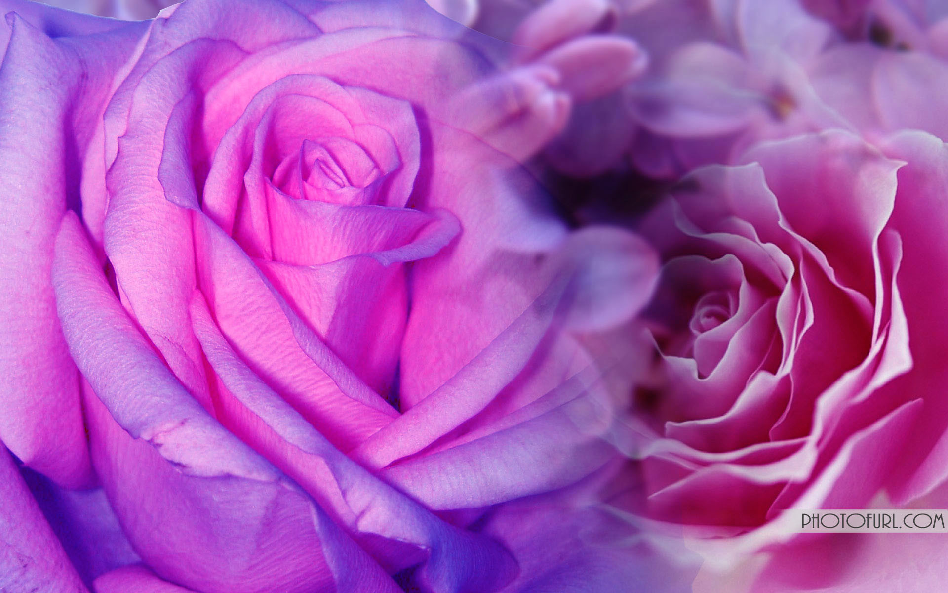 Cool Pink and Purple Backgrounds   Pink And Purple Flowers Background Hd  Cool 7 HD Wallpapers