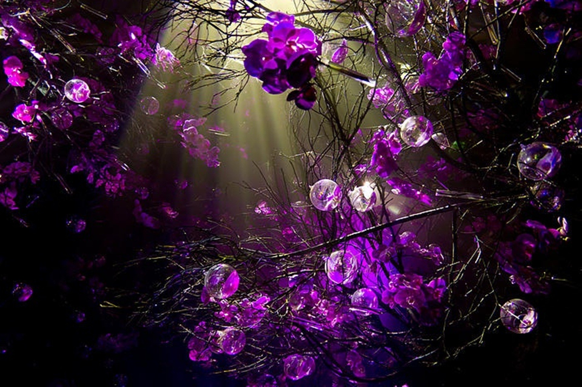 … background wallpapers; purple wallpapers for computer desktops  wallpapersafari …