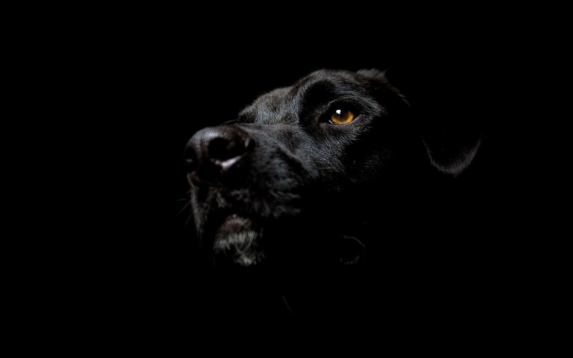 desktop black dog wallpaper hd download Dog wallpapers, HD puppy wallpaper,  Free dog wallpapers