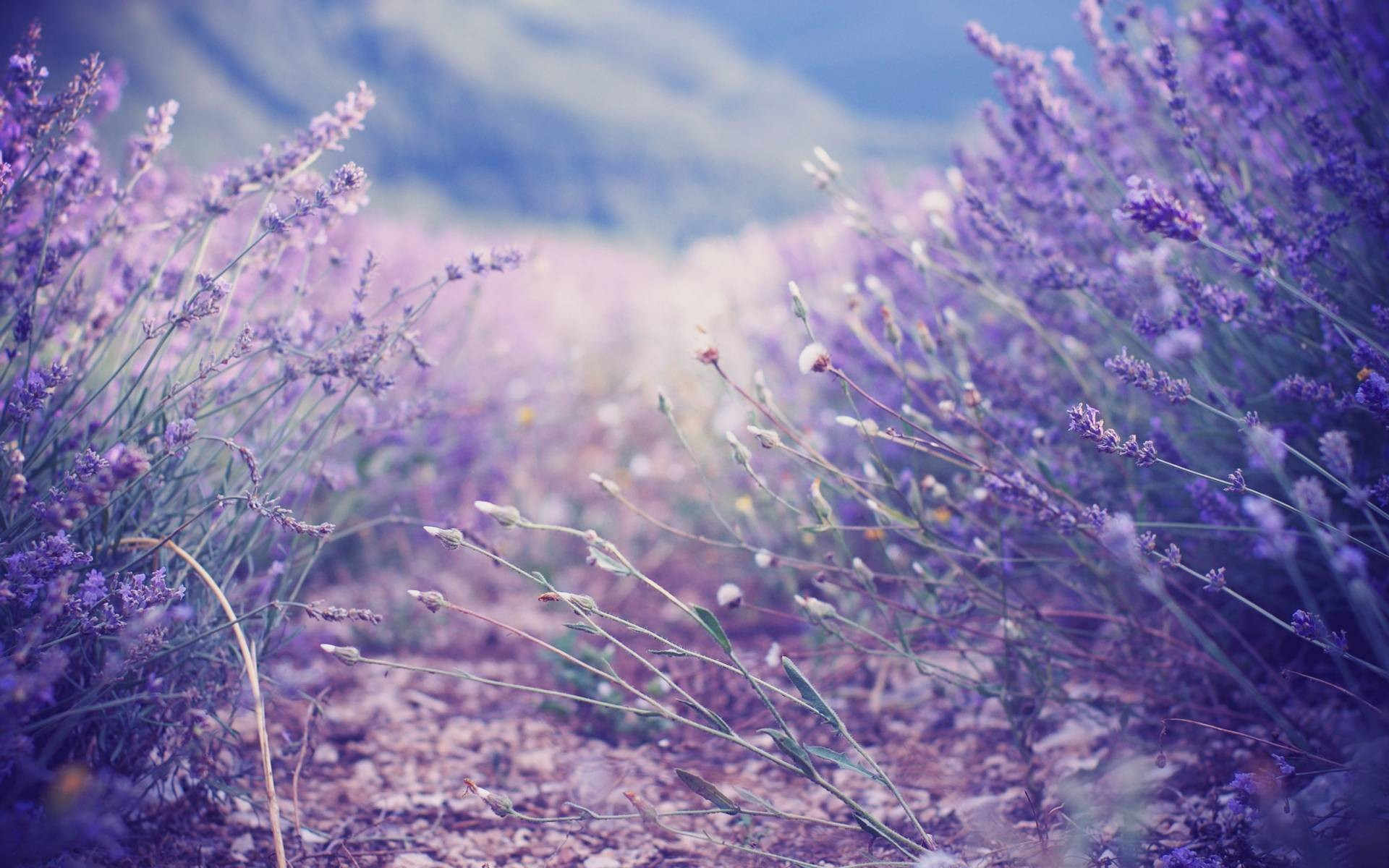 Lavender Wallpapers – Full HD wallpaper search – page 4