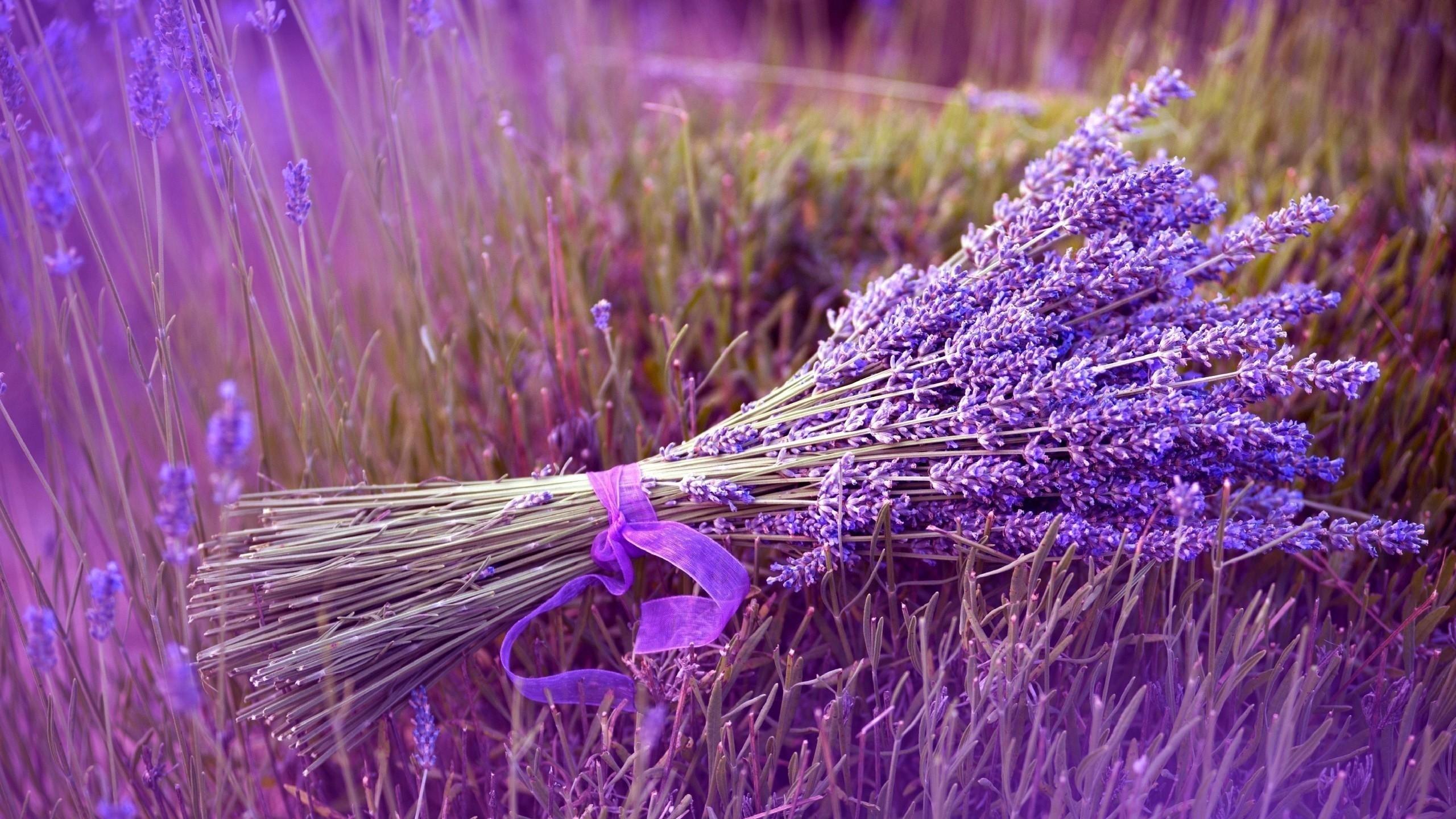 Wallpaper lavender, flower, ribbon, field