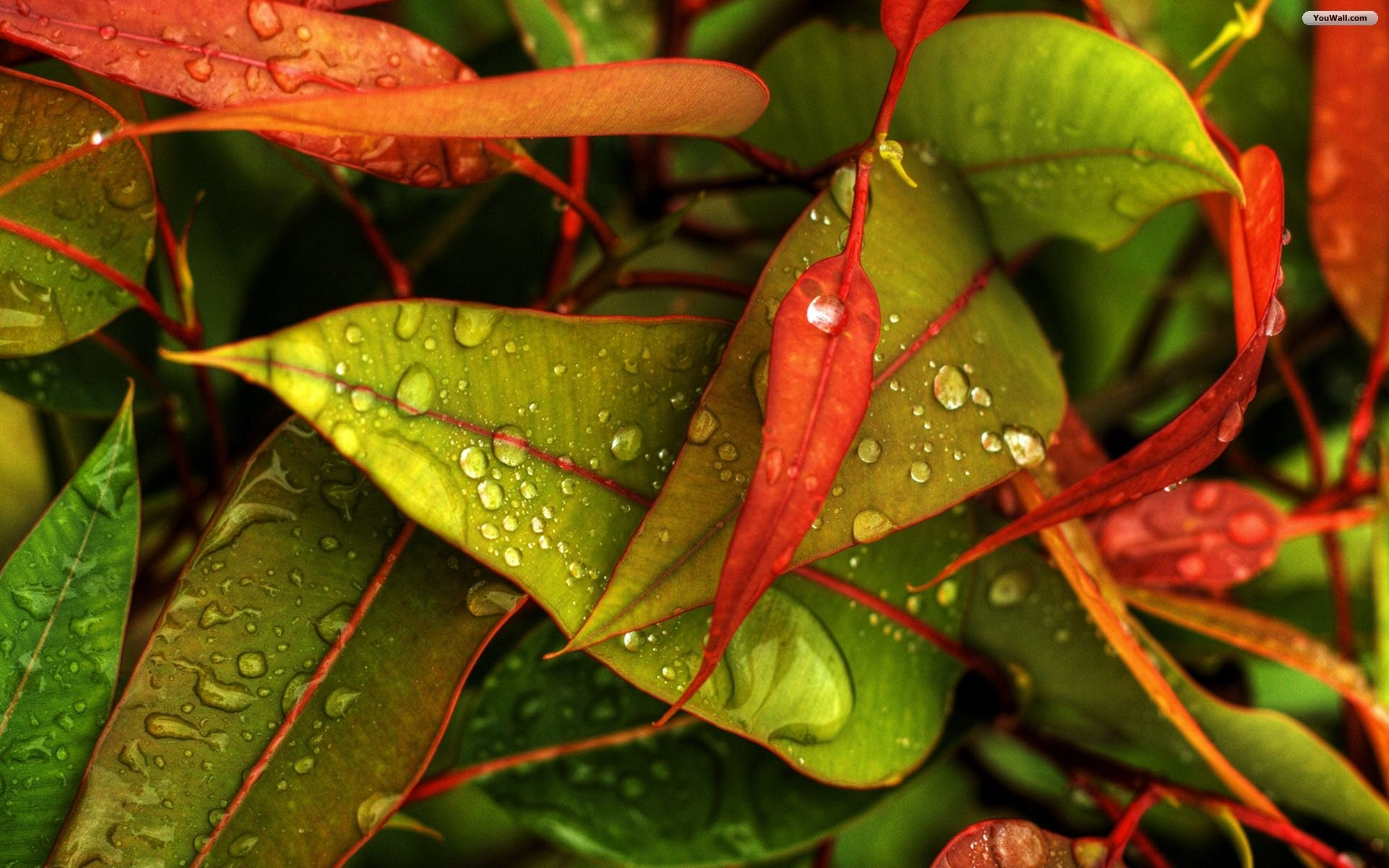 Red and Green Leaves Wallpaper
