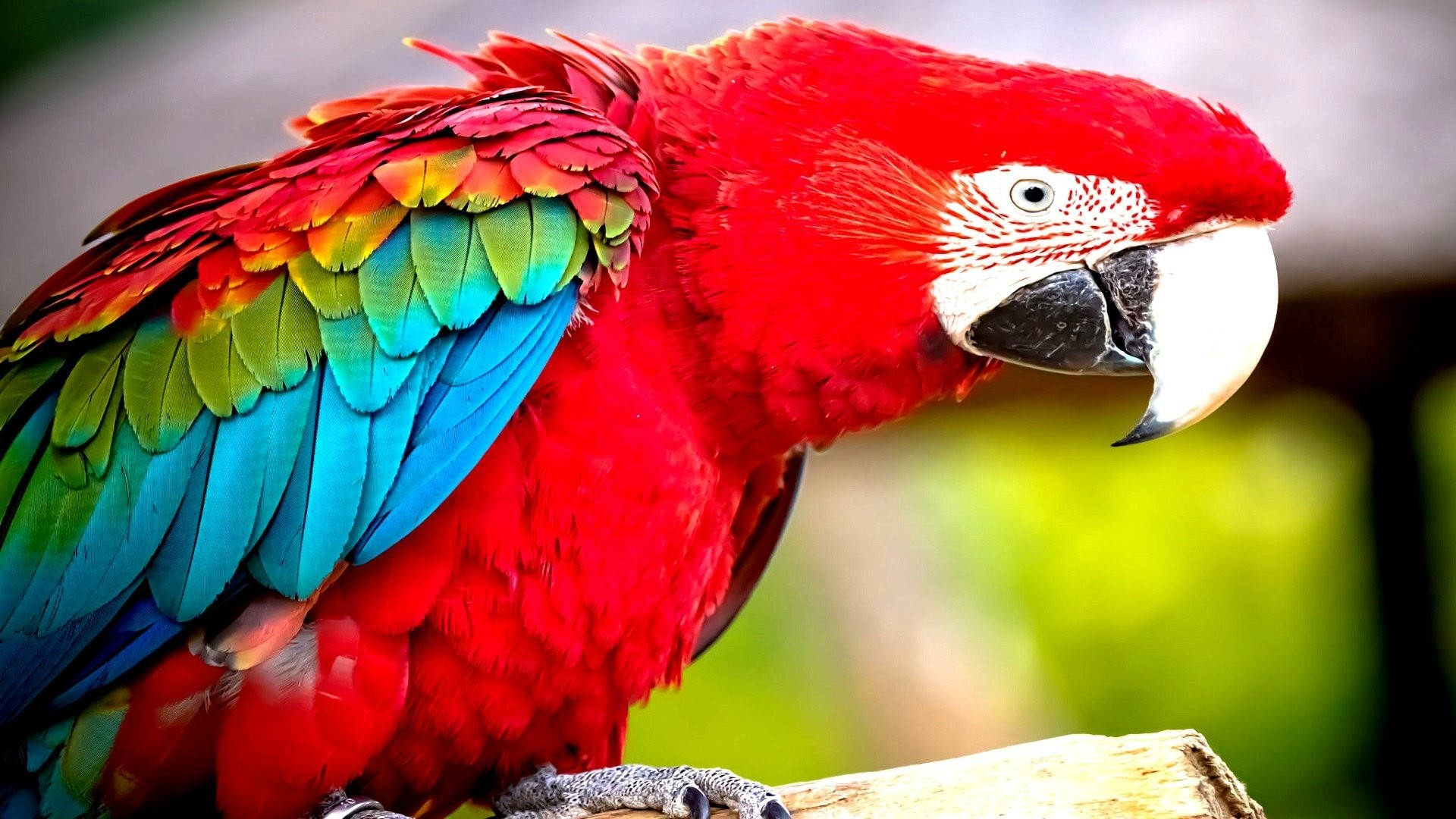HD Wallpaper | Background ID:449418. Animal Red-and-green Macaw.  2 Like