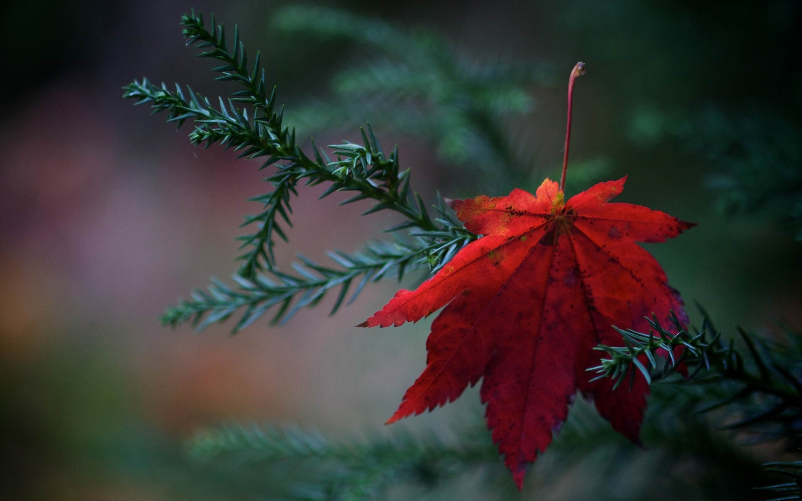 Red and Green Leaf Nature Rain Wallpaper HD