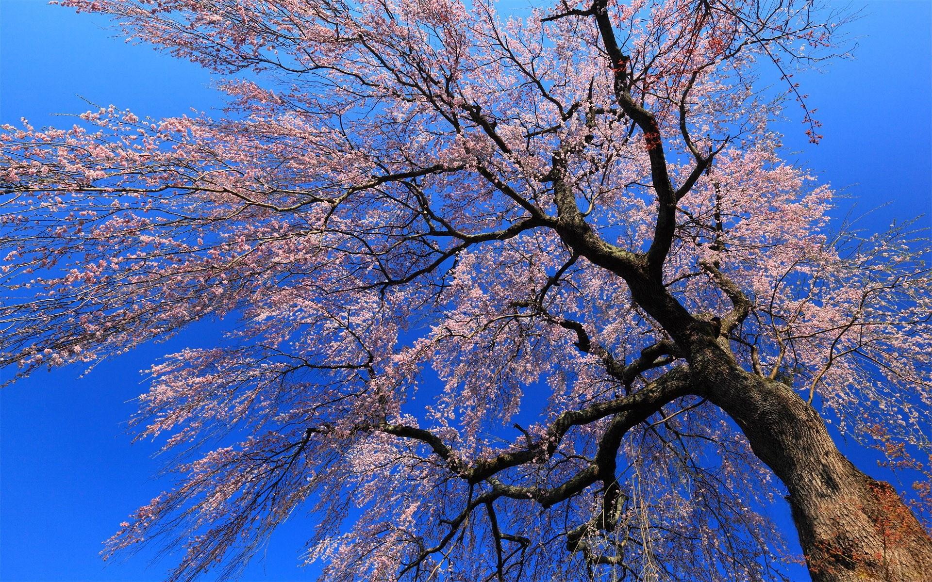 Nice tree, hd wallpapers on -> www.