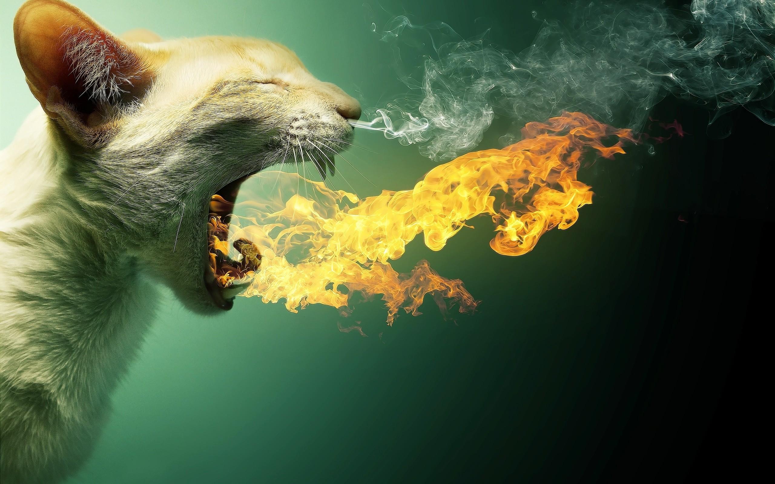 Cat Flame