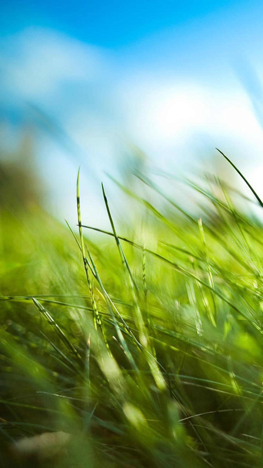 Nature Sunny Blue Sku Green Grassland Field #iPhone #6 #plus #wallpaper