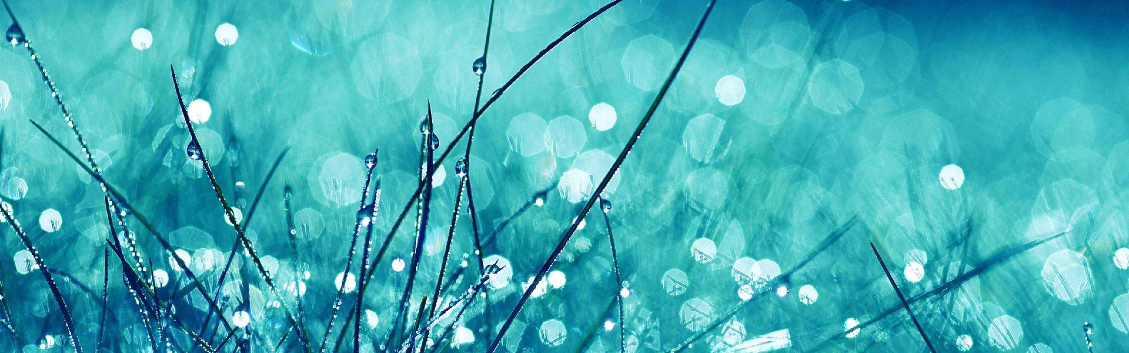 Wallpaper grass, glare, glitter, light, bright