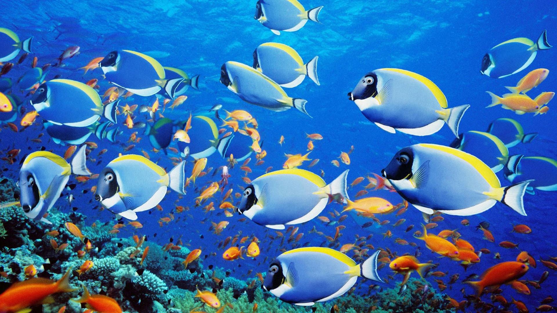 hd pics photos fish marine blue desktop background wallpaper