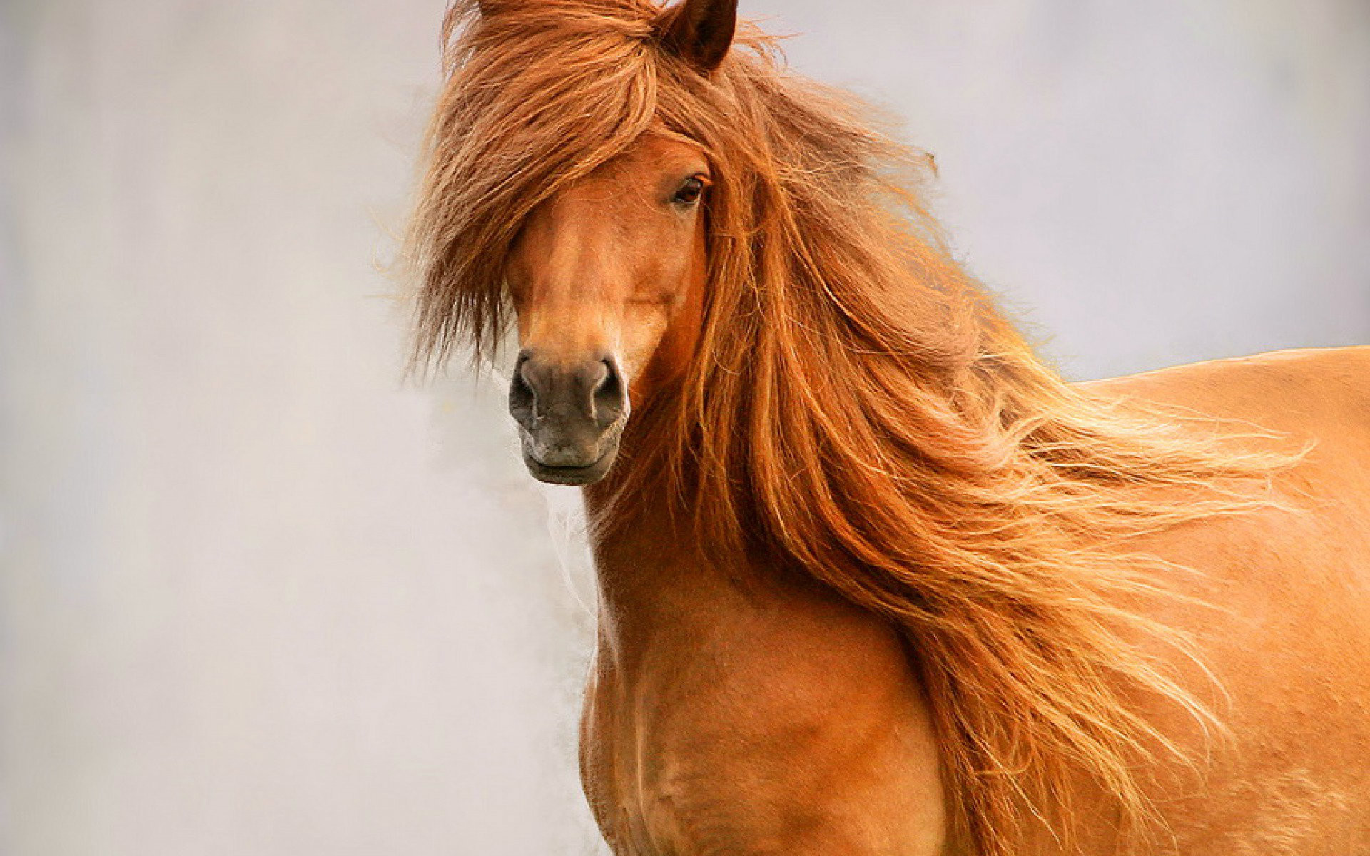 Light Brown Horse Beautiful Desktop Wallpaper