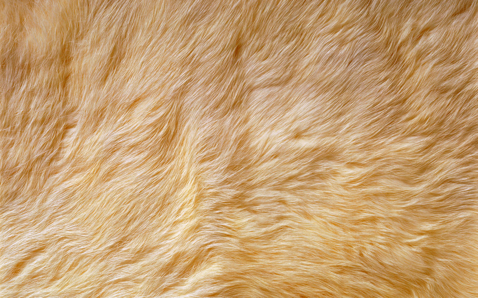 Light Brown Fur Background Pattern