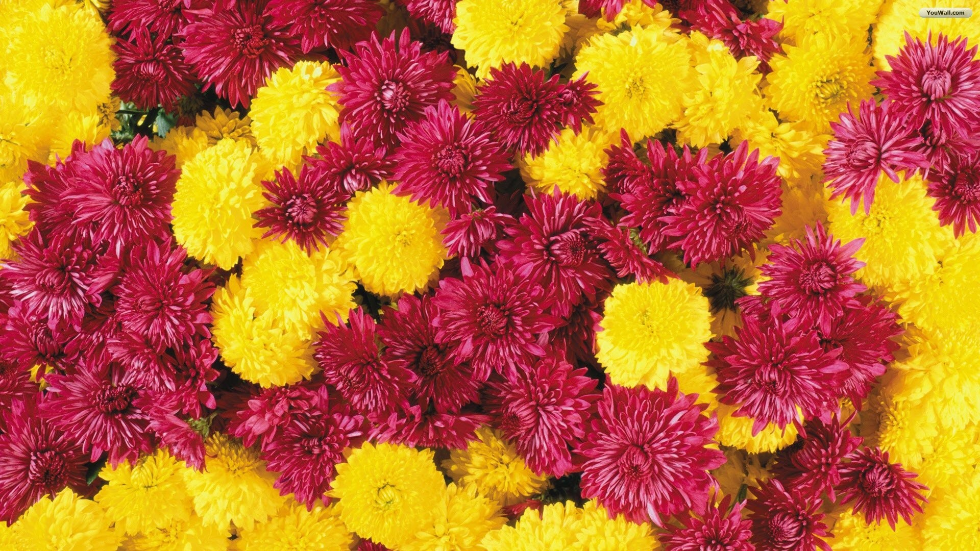 Flowers Wallpapers Yellow Flowers free computer desktop hd 1280×1024 Yellow  Flower Wallpapers (46