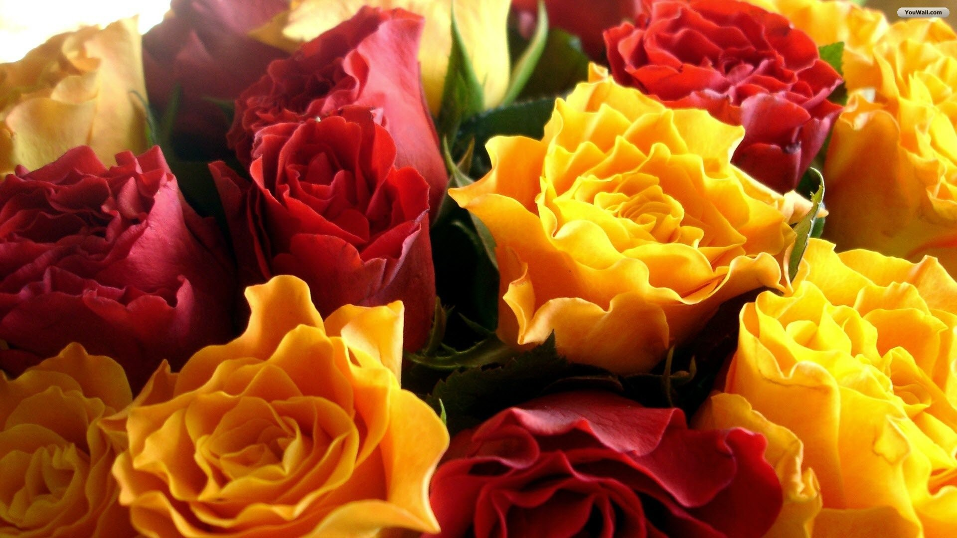 Yellow and Red Flowers Wallpaper