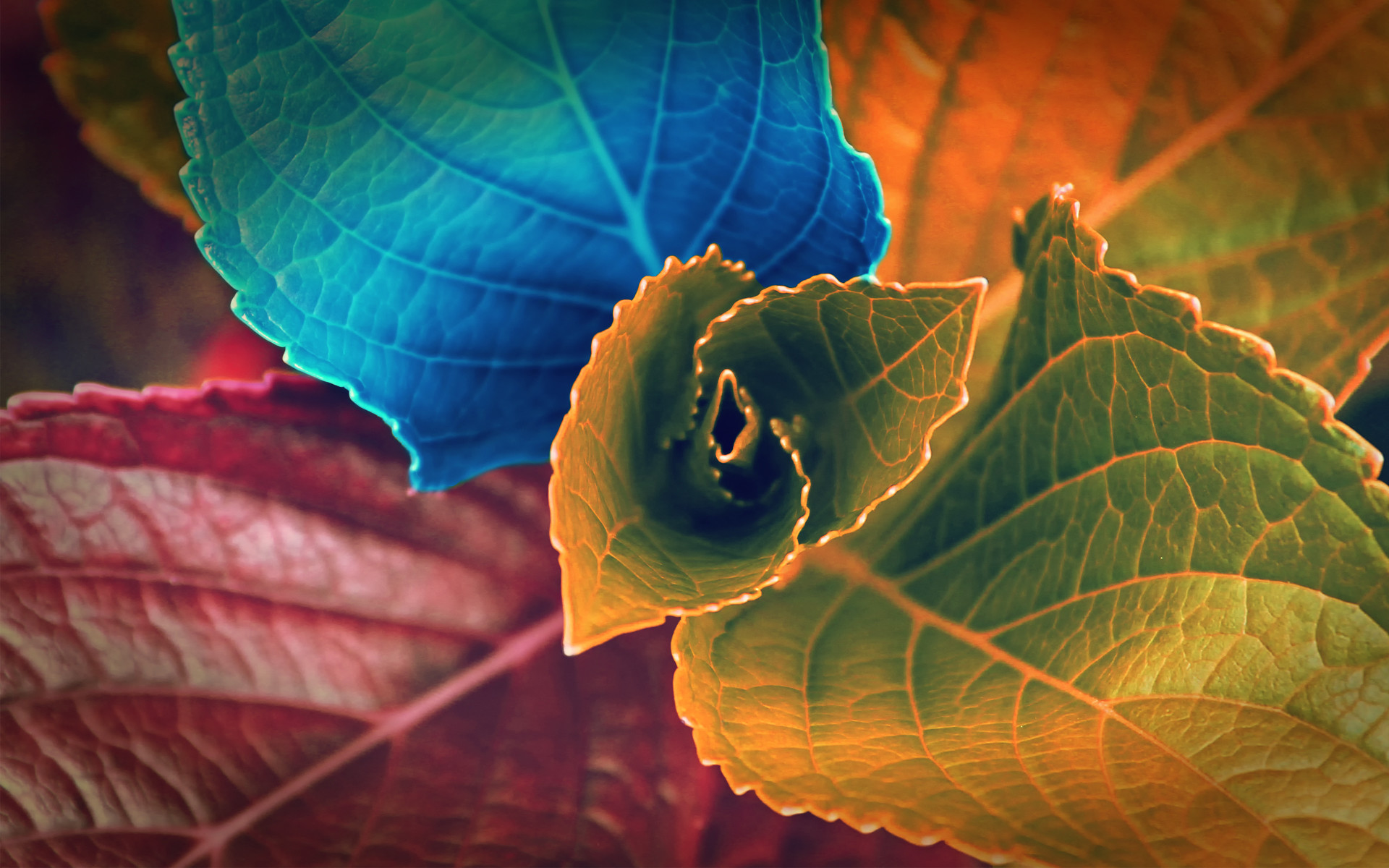 … free download Basic Color Leaves Yellow Red Blue Abstract HD wallpaper