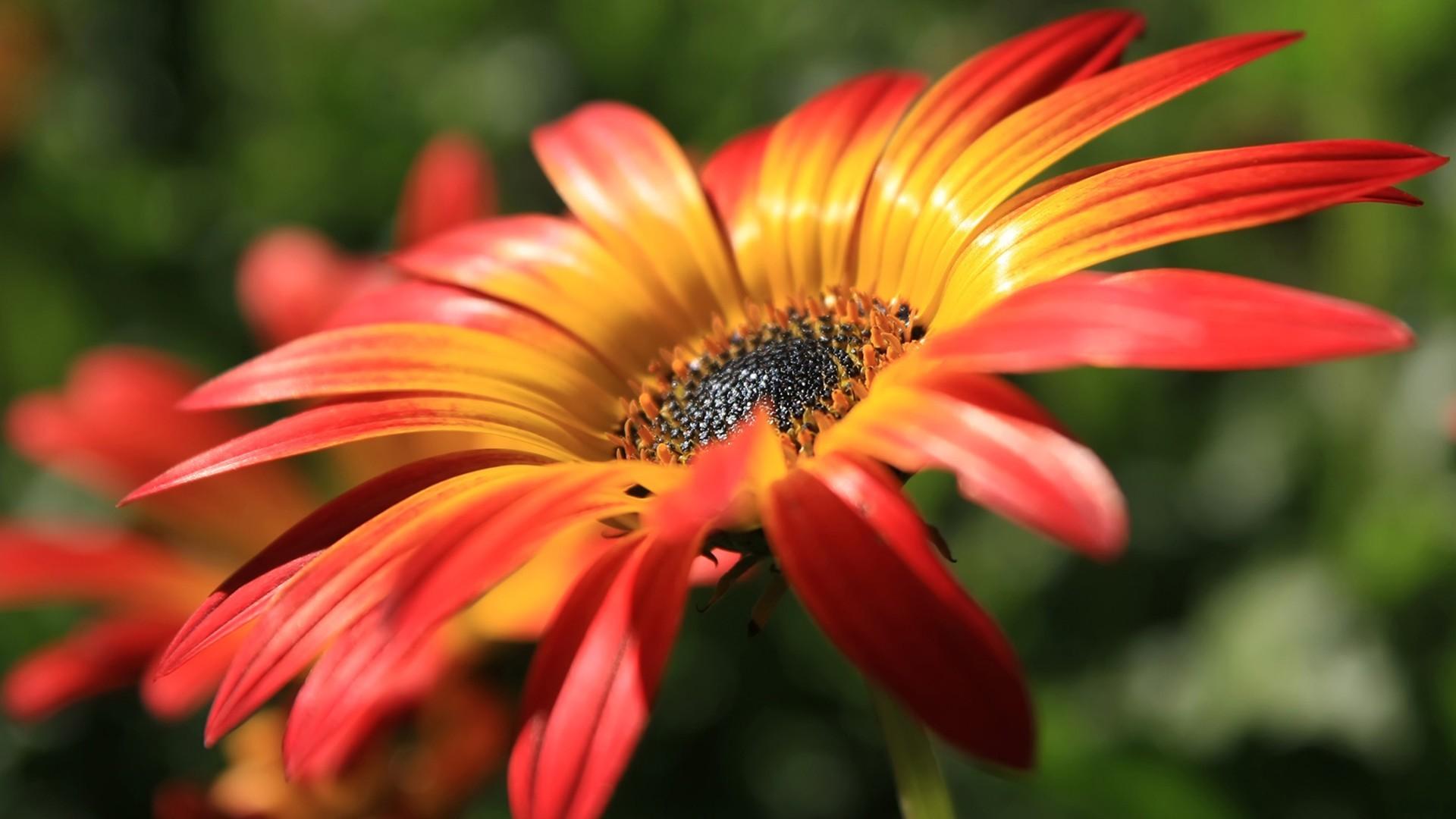 Yellow red flower macro