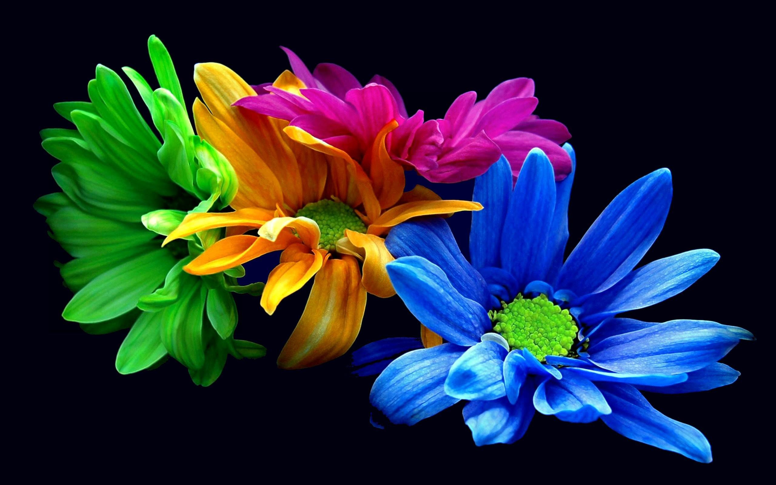 Earth – Flower – Blue – Opus – Green – Orange – Leaf – Pink –