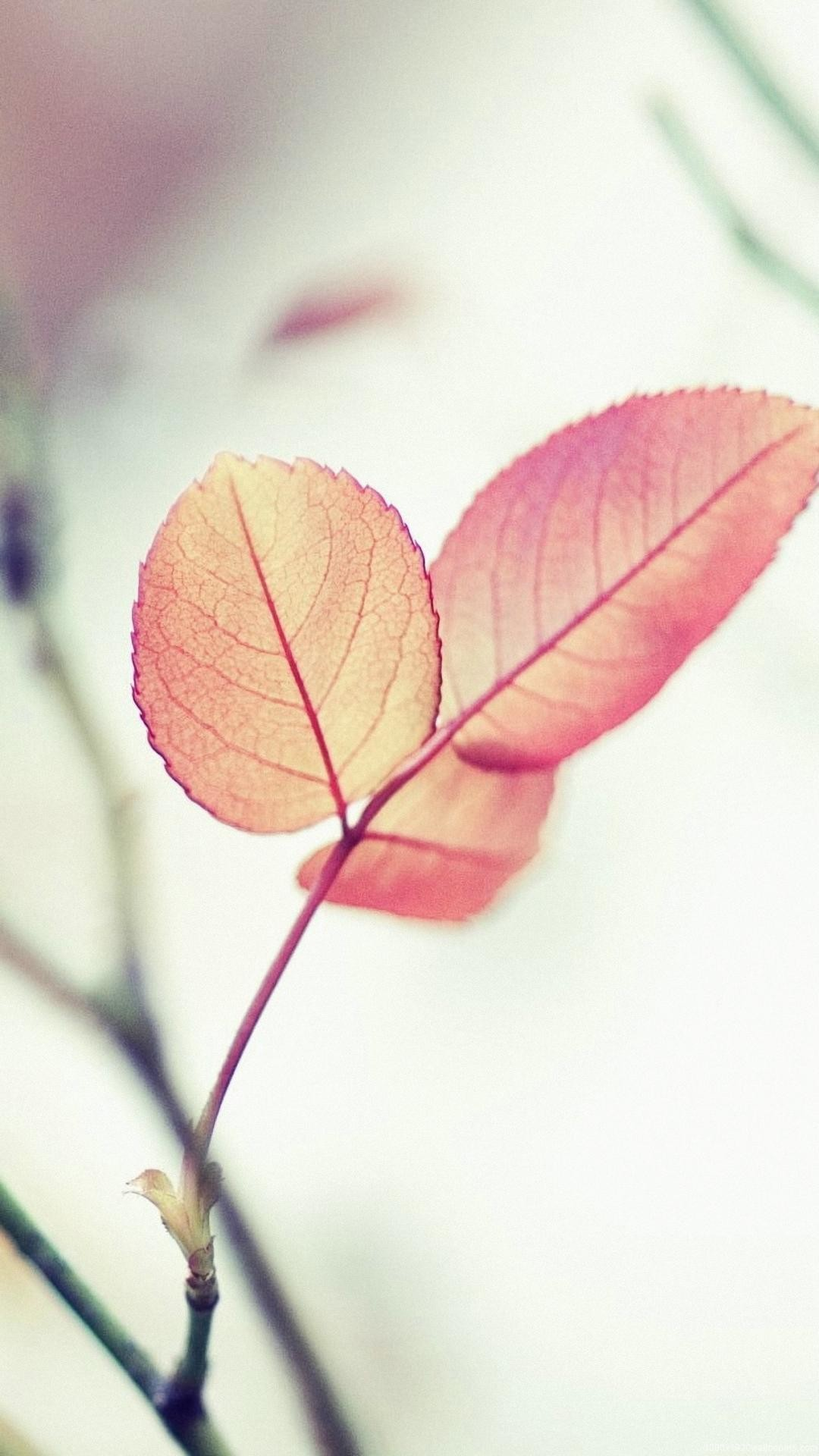 wallpaper.wiki-Cool-Leaf-Pink-Iphone-Wallpaper-PIC-