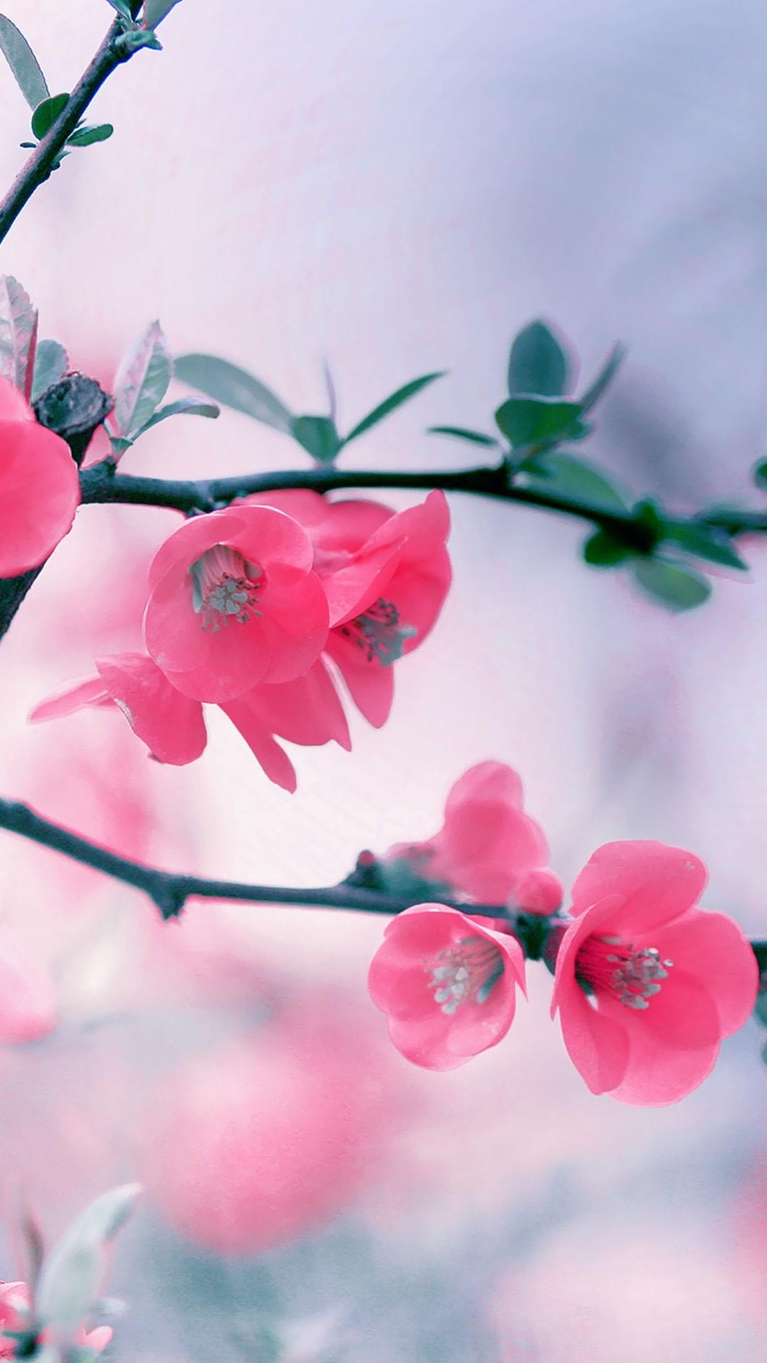 Download Free Cool Pink Iphone Wallpaper.