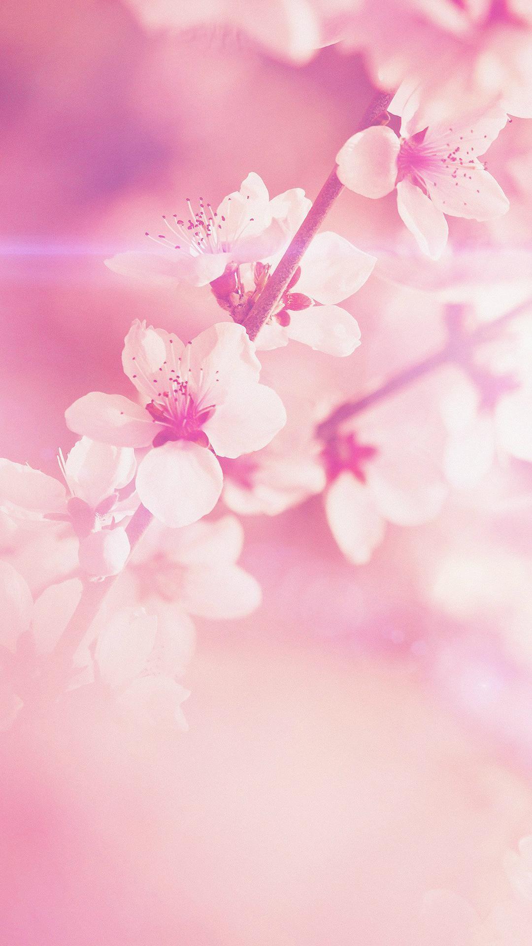 wallpaper.wiki-Free-Cool-Pink-Iphone-Image-Download-