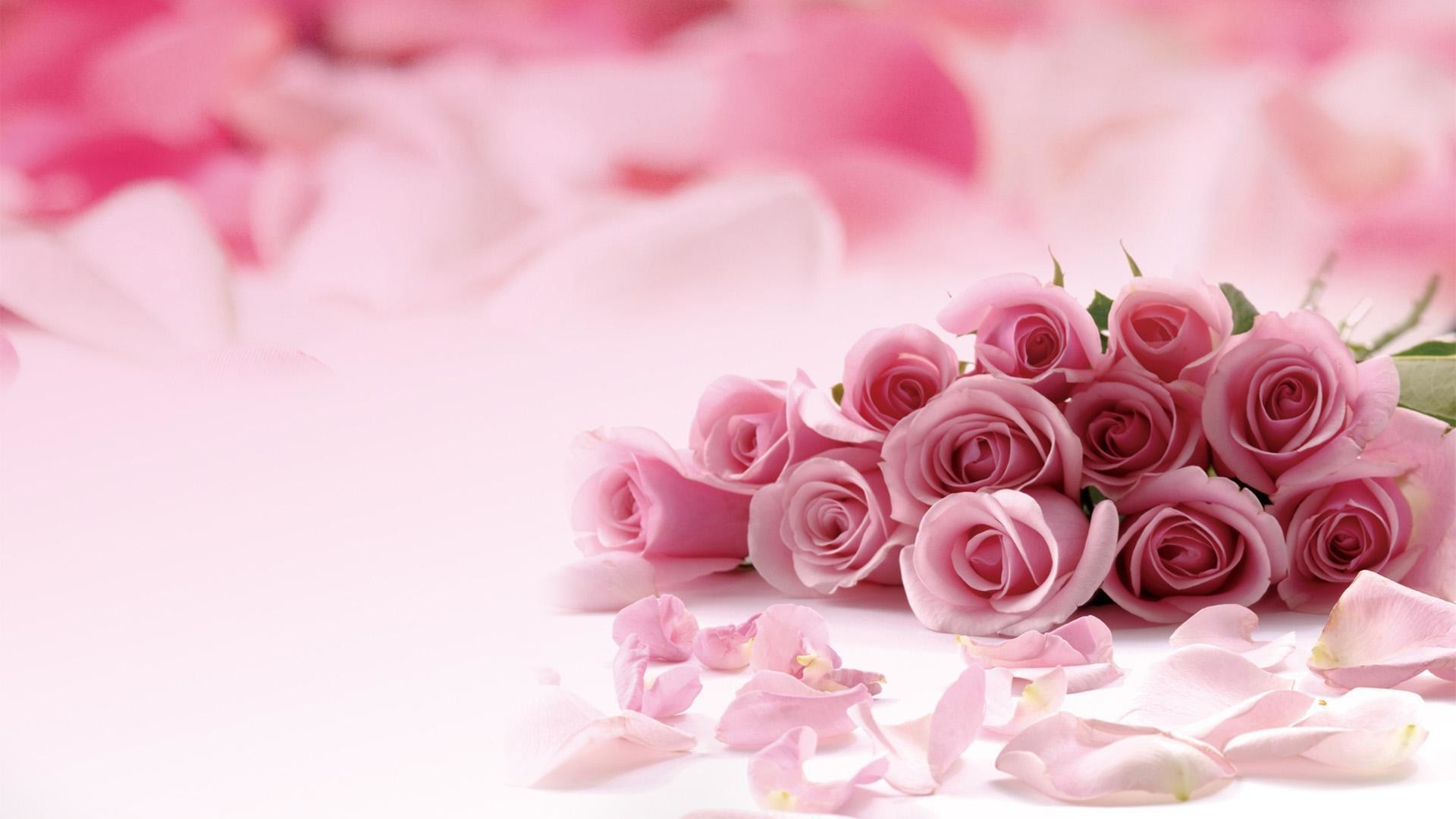 Pink-roses-picture-HD-Desktop-Wallpaper-pink purple .