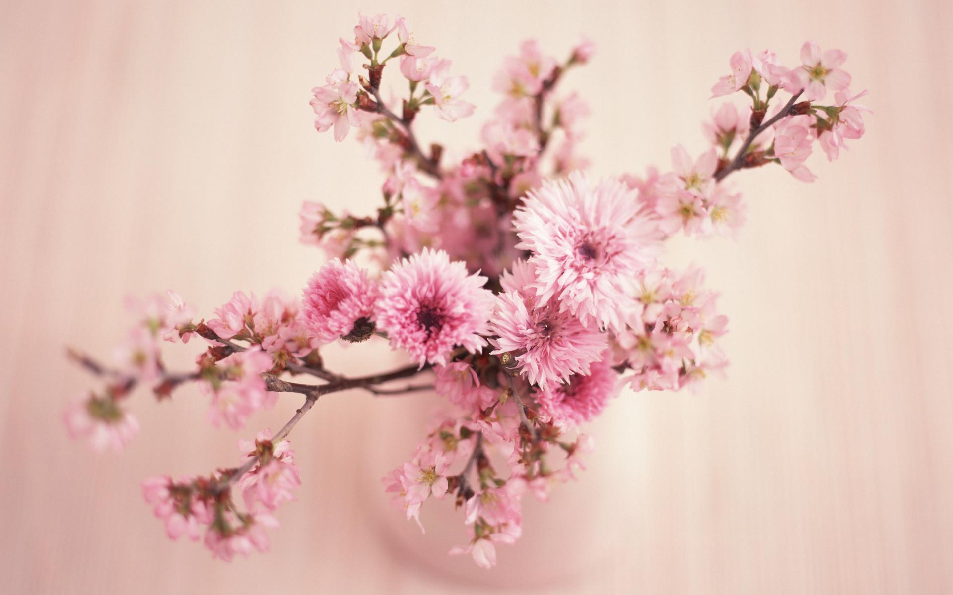Pink Flowers   beauty wallpaper, flowers, pink flower   HD Desktop  Wallpapers