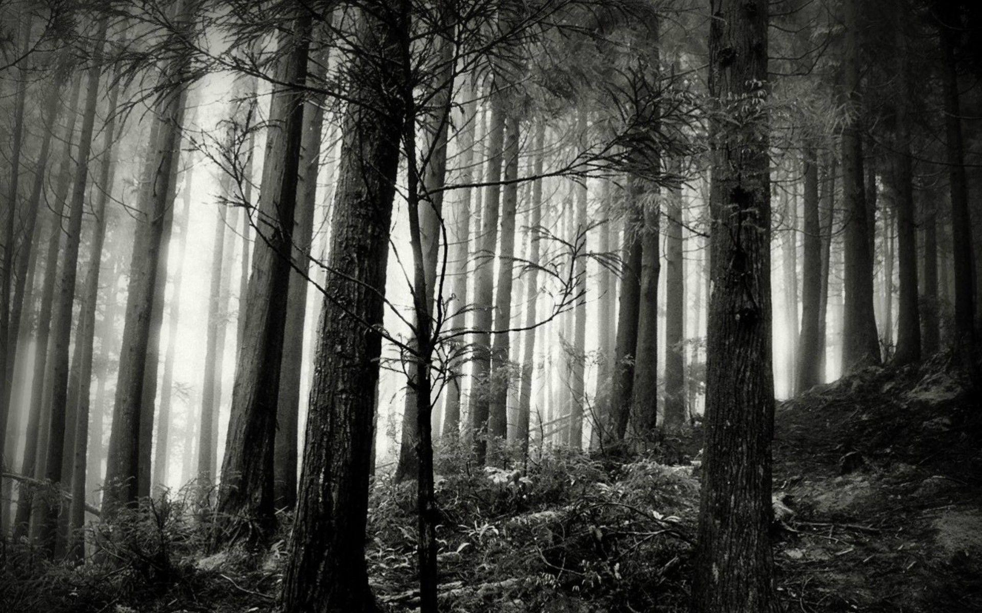 Black And White Forest Images Wallpaper | Green HD Wallpaper