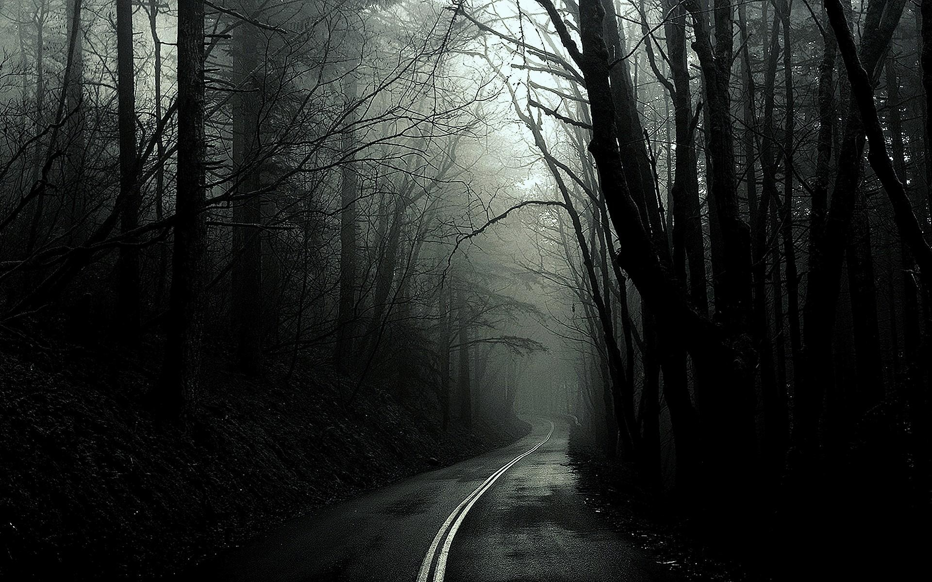 wallpaper.wiki-Amazing-Black-and-White-Forest-Background-