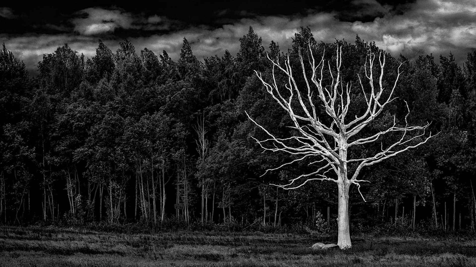 White Forest Black Tree Bleached Wallpaper[1920 × 1080] …