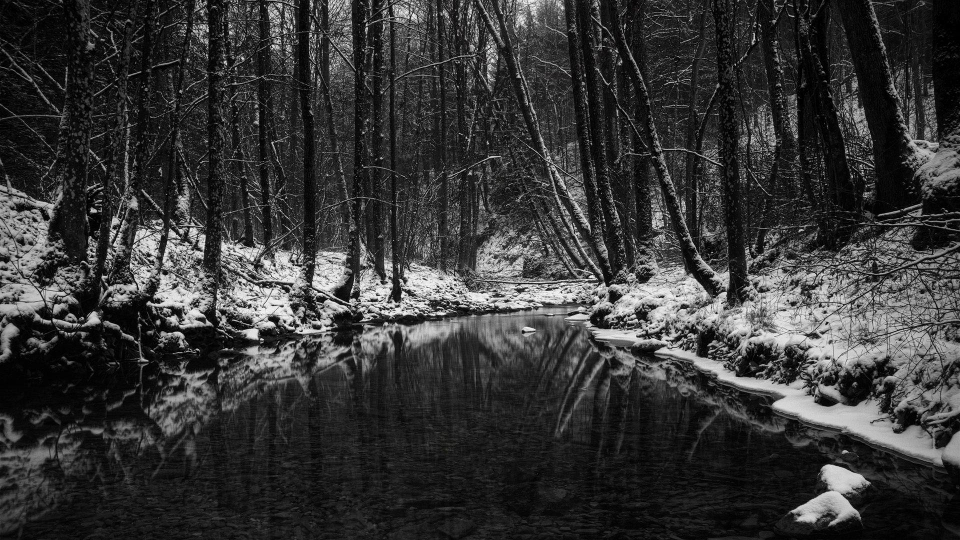 wallpaper.wiki-Download-Black-and-White-Forest-Photo-