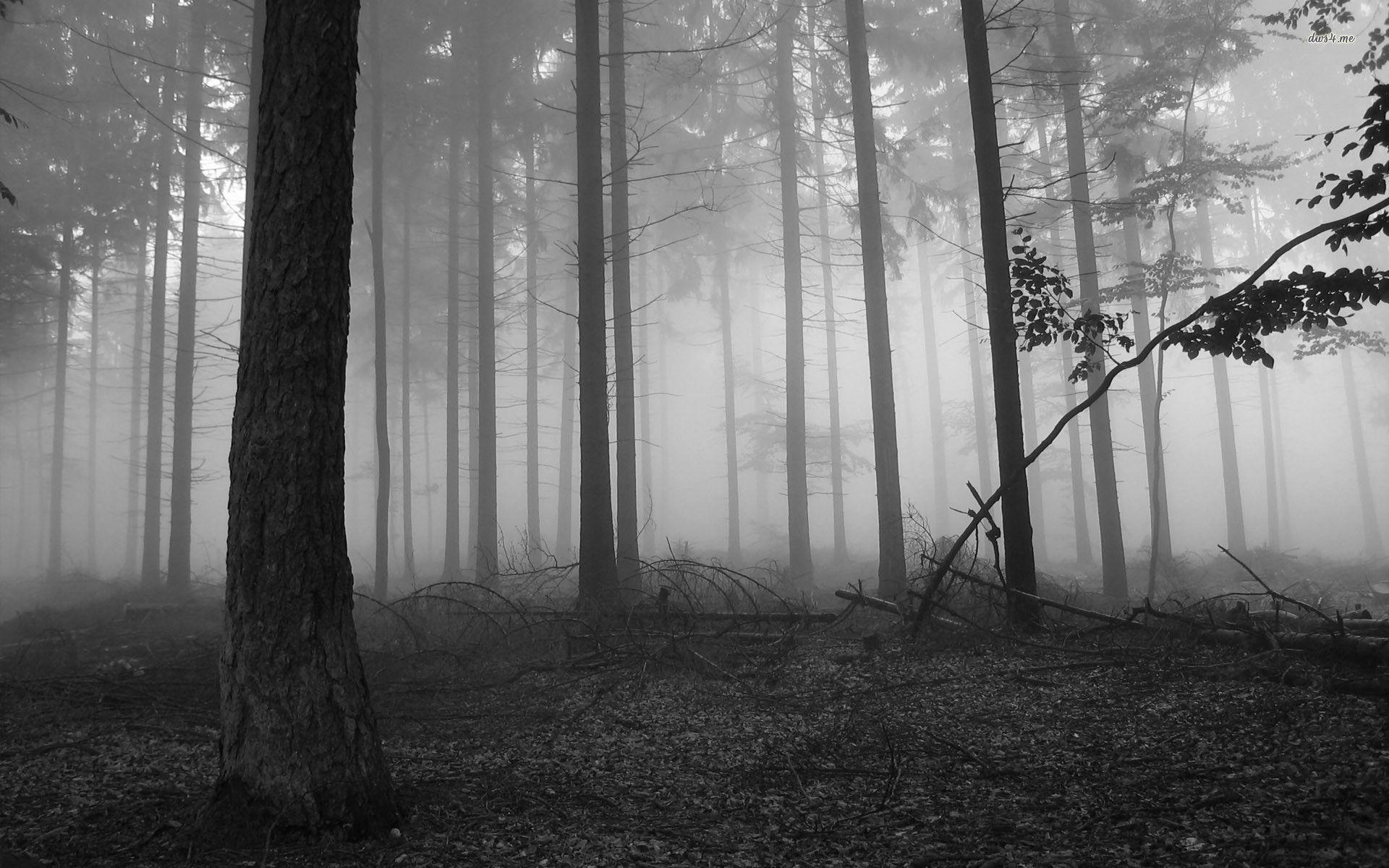 Dark Forest wallpaper – 1061842