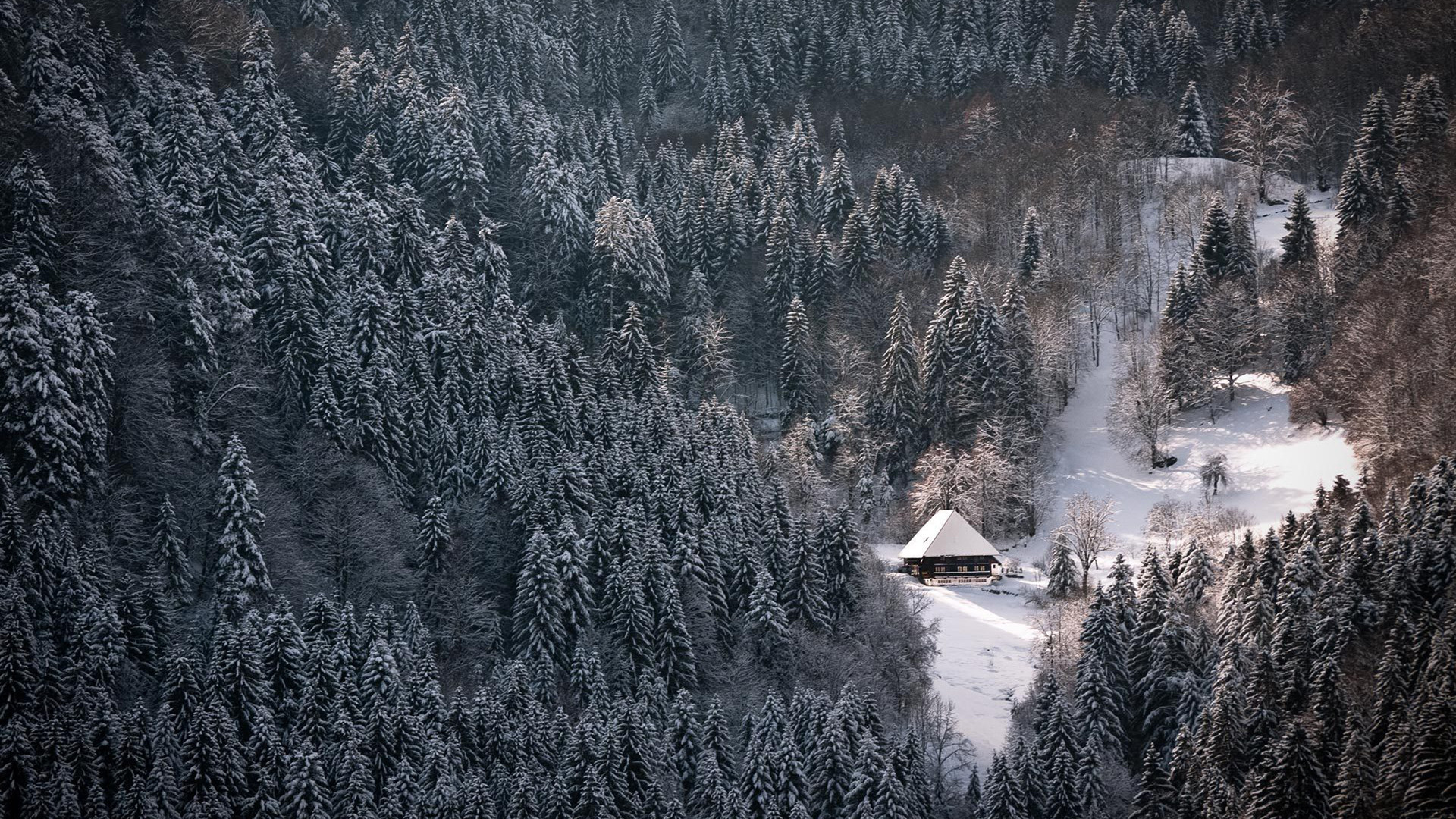 Image – Hd-wallpapers-wallpaper-winter-forest-black-snowy-1920×1080- wallpaper.jpg | Simcountry | FANDOM powered by Wikia