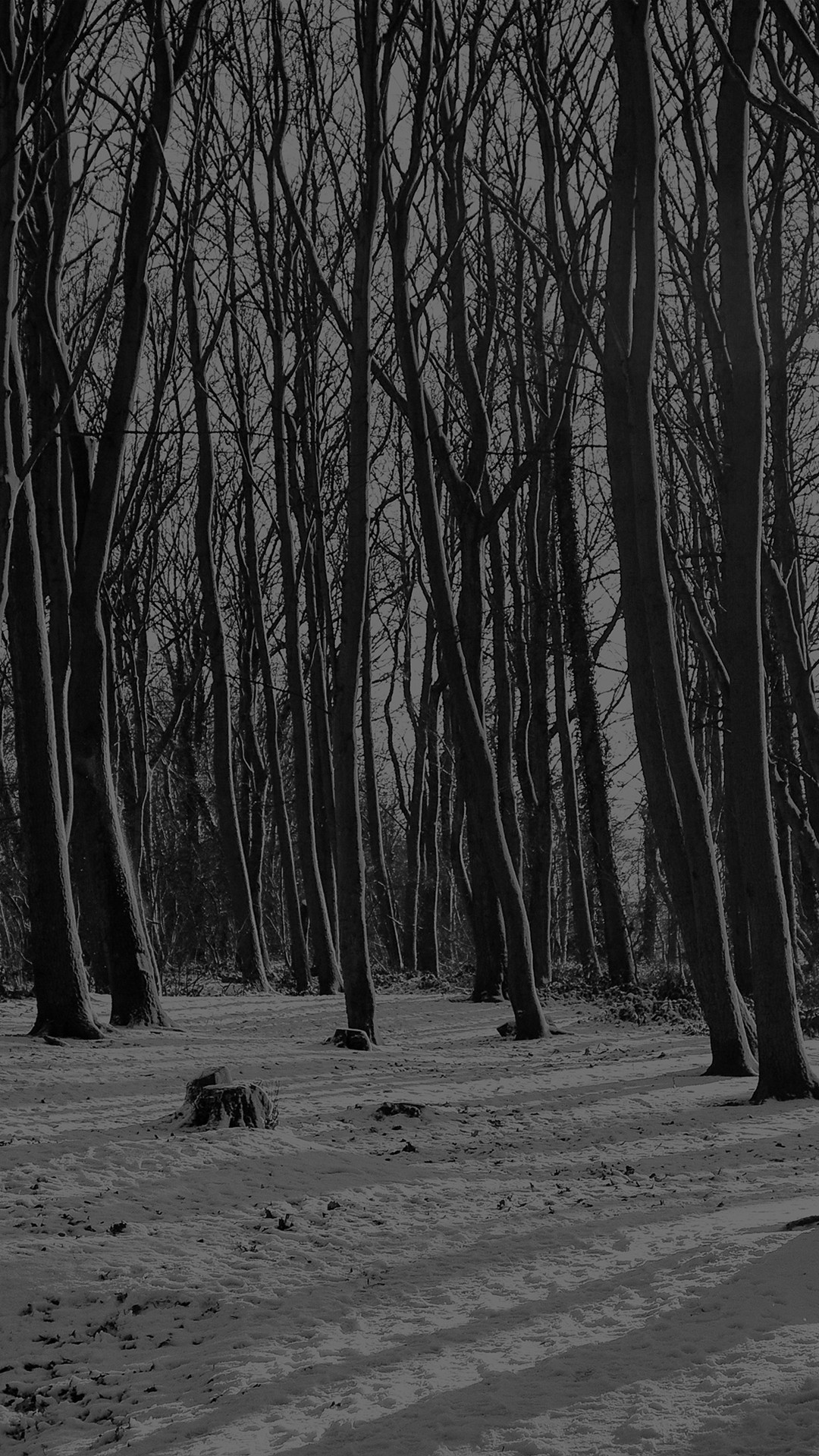 Cold Winter Forest Snow Nature Mountain Dark #iPhone #6 #plus #wallpaper