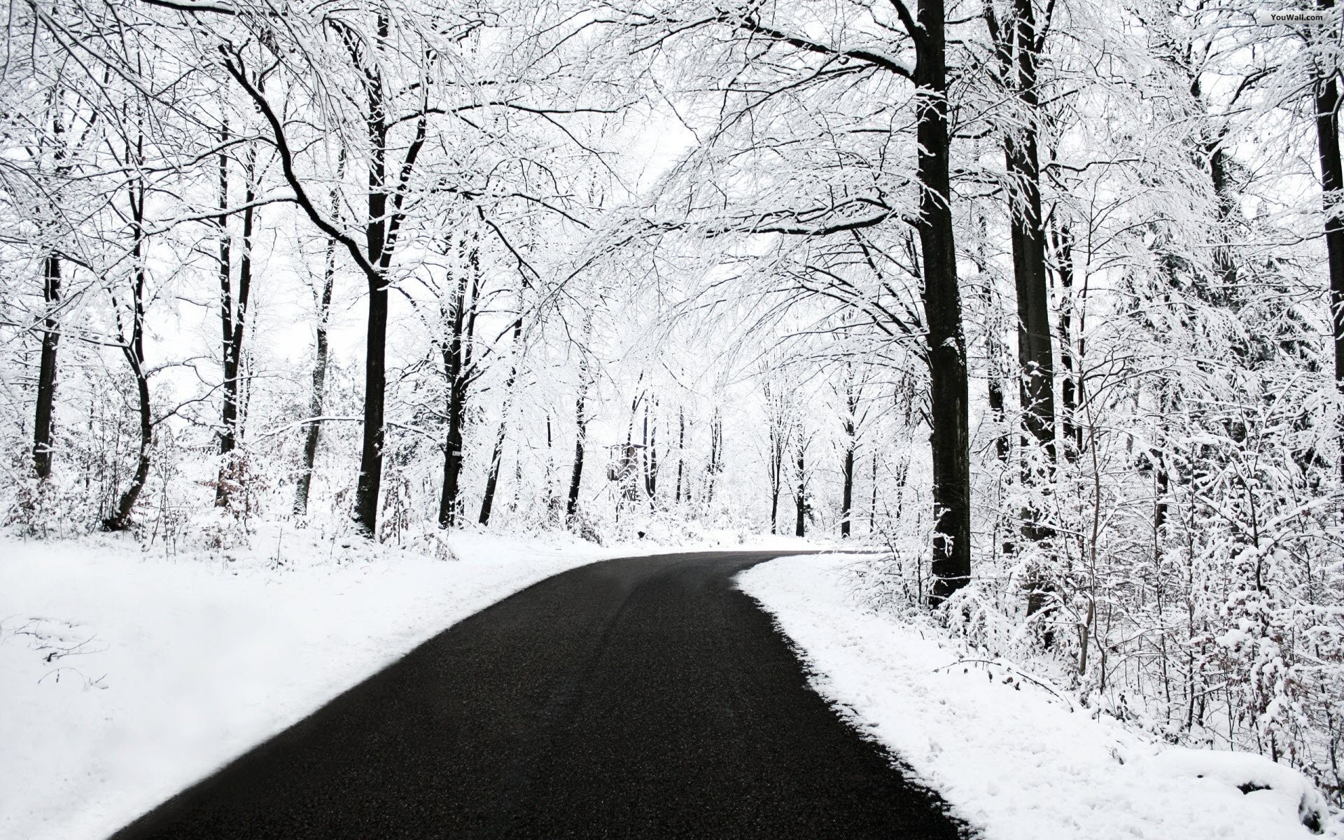 Road on the White Forest Wallpaper