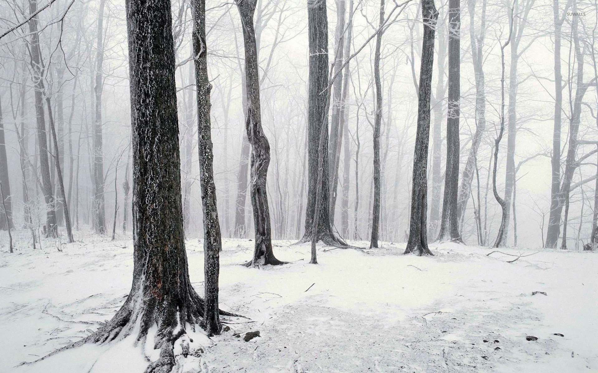 Winter in the forest wallpaper jpg