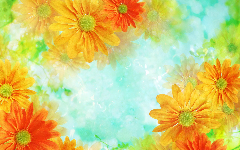 flowers background orange – HD Desktop Wallpapers   4k HD