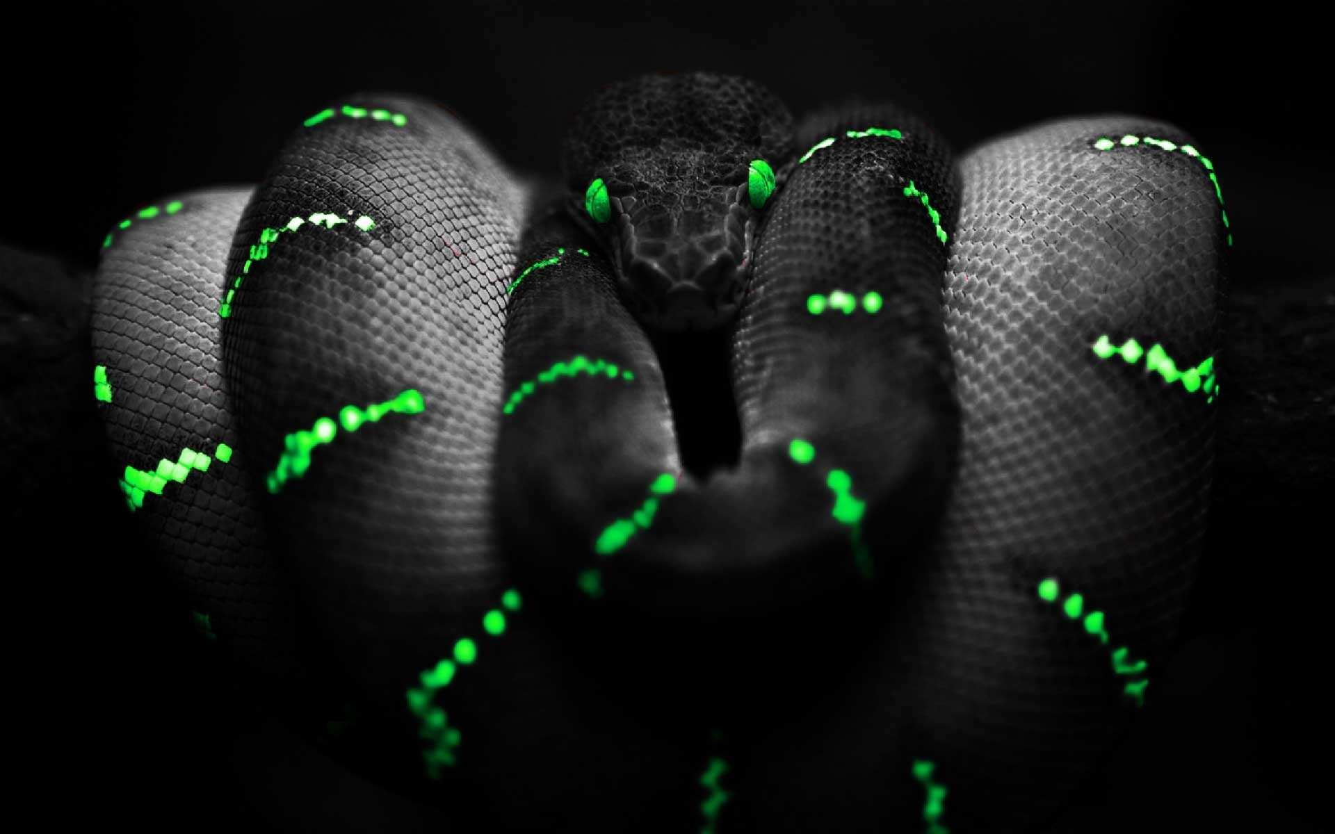 Awesome Snake Wallpaper in 3d